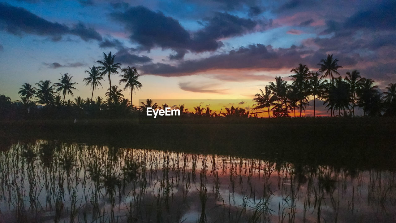 tree, sky, beauty in nature, tranquility, plant, scenics - nature, water, tranquil scene, sunset, tropical climate, palm tree, reflection, cloud - sky, nature, no people, growth, silhouette, lake, idyllic, outdoors, coconut palm tree