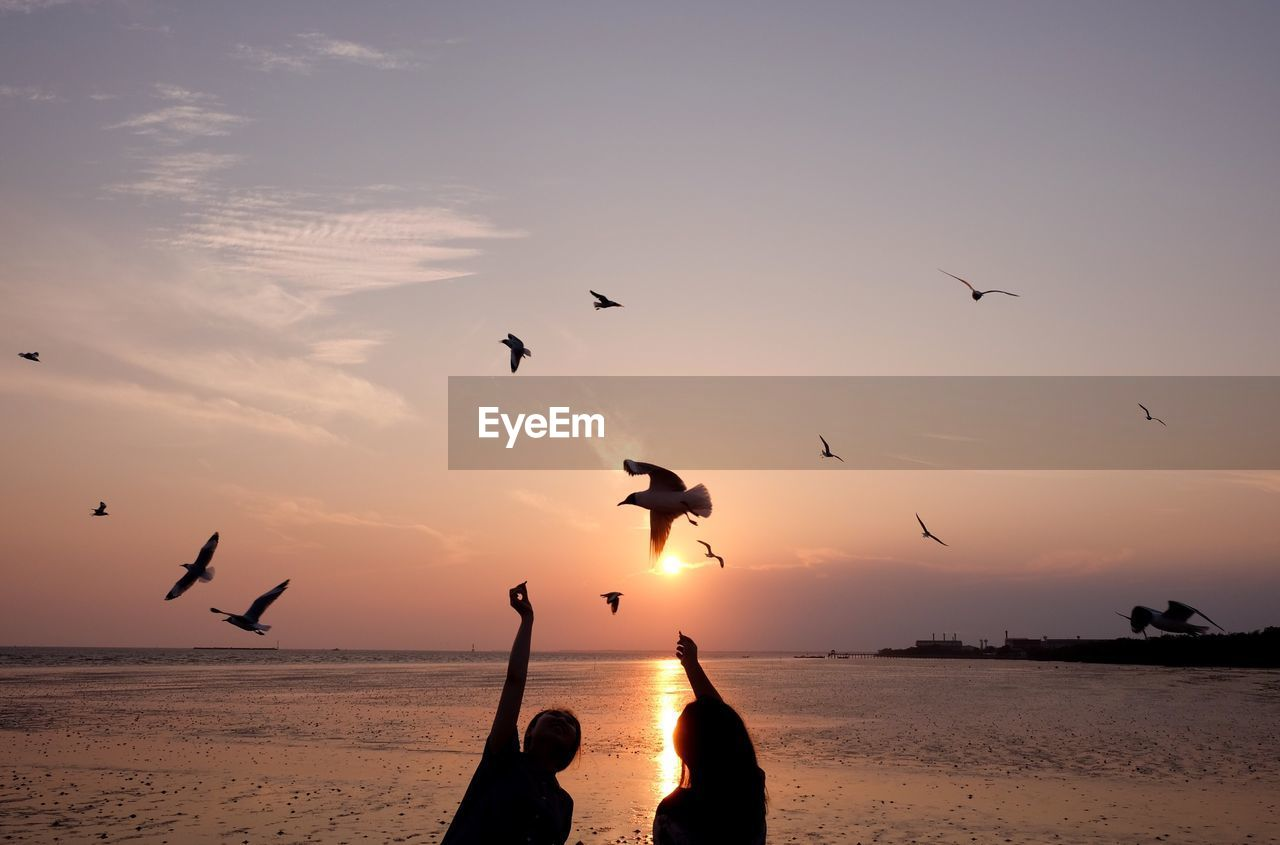 sunset, bird, silhouette, flying, nature, beauty in nature, animals in the wild, sea, animal themes, sky, water, mid-air, animal wildlife, scenics, sand, beach, flock of birds, outdoors, togetherness, horizon over water, spread wings, large group of animals, no people, day