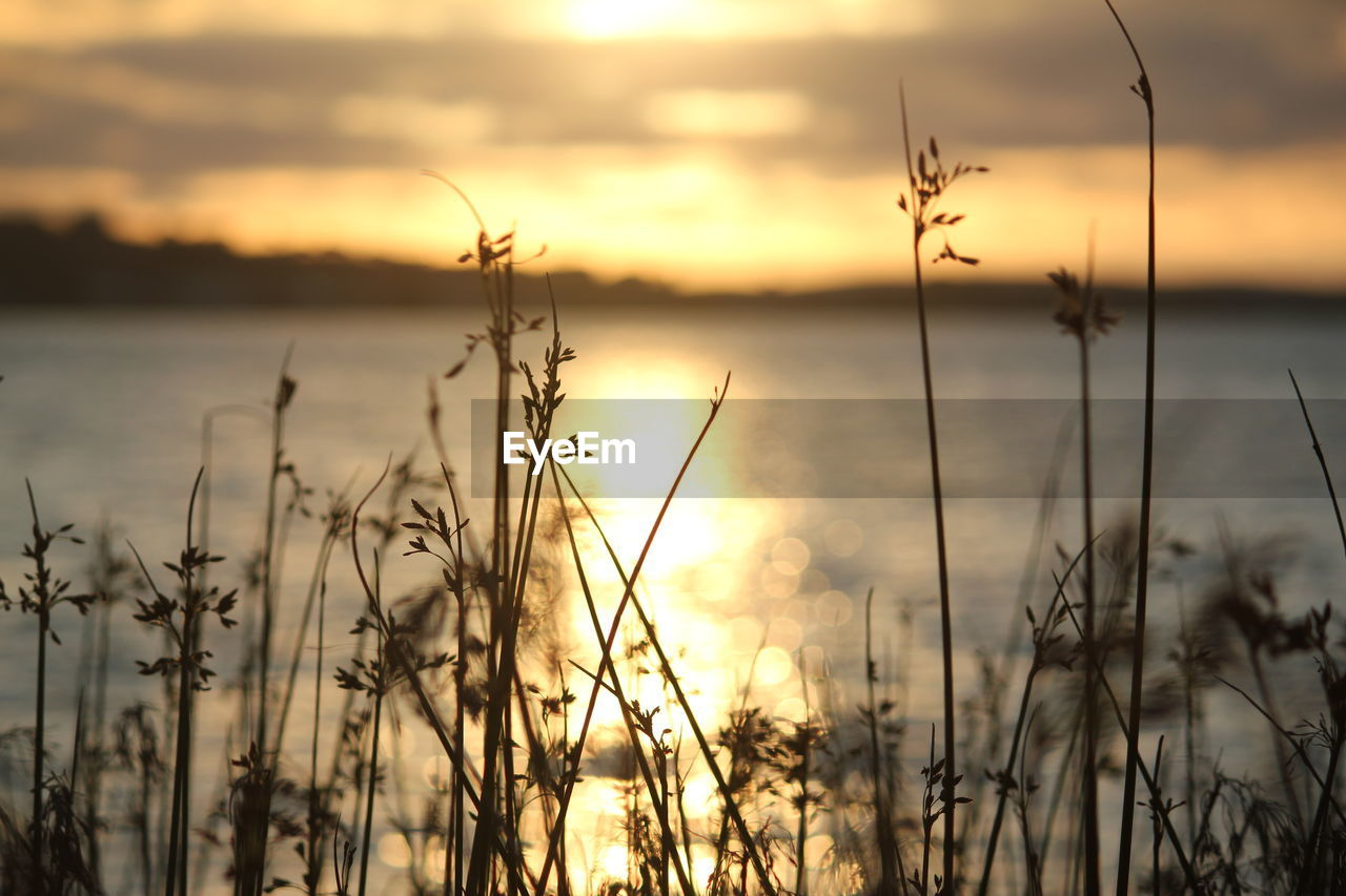 sunset, nature, beauty in nature, tranquility, tranquil scene, scenics, growth, plant, outdoors, sky, water, no people, grass, cloud - sky, lake, silhouette, day, close-up