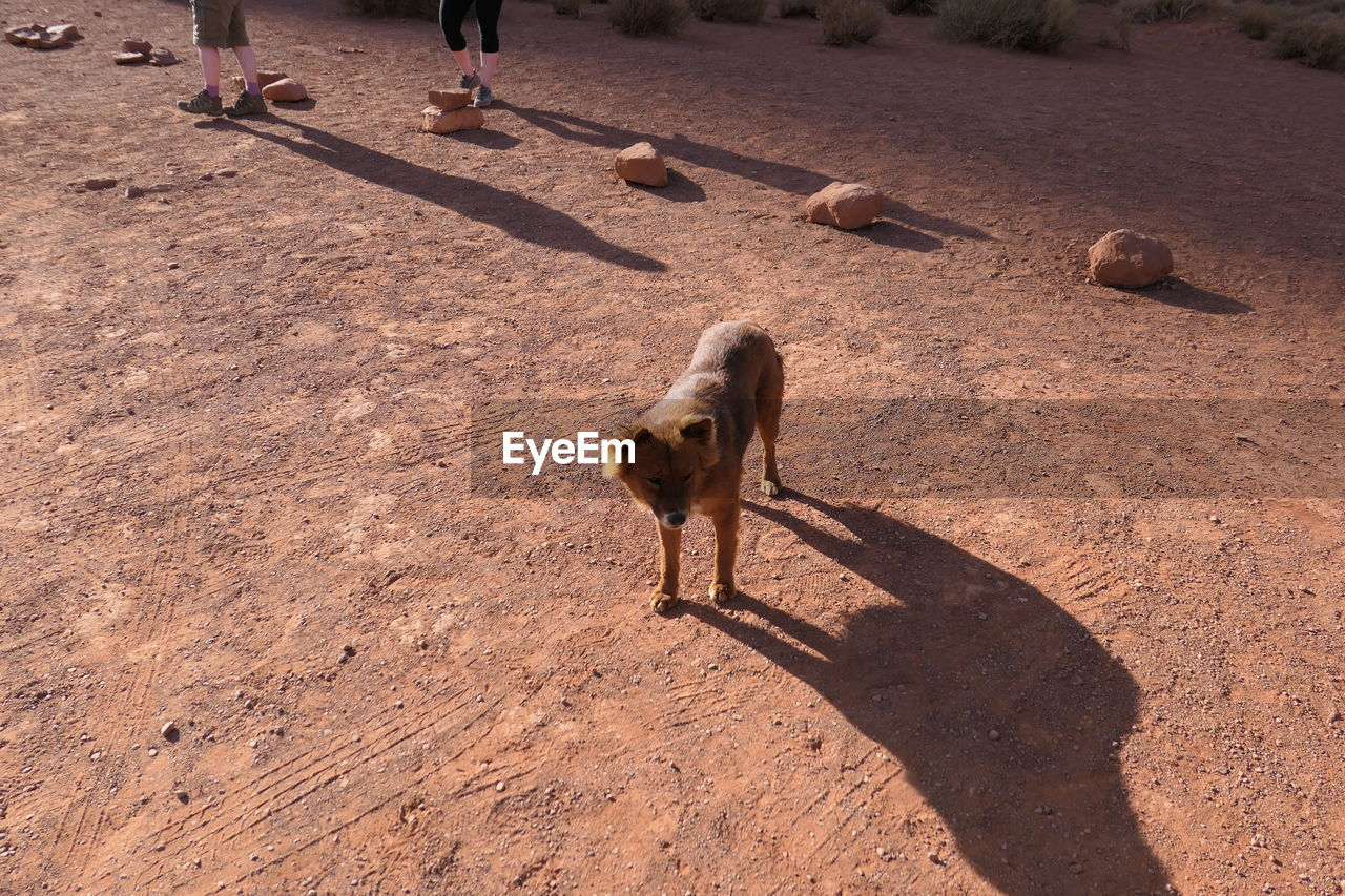 animal, mammal, animal themes, domestic, one animal, pets, shadow, domestic animals, vertebrate, sunlight, dog, canine, nature, high angle view, day, incidental people, outdoors, standing, field