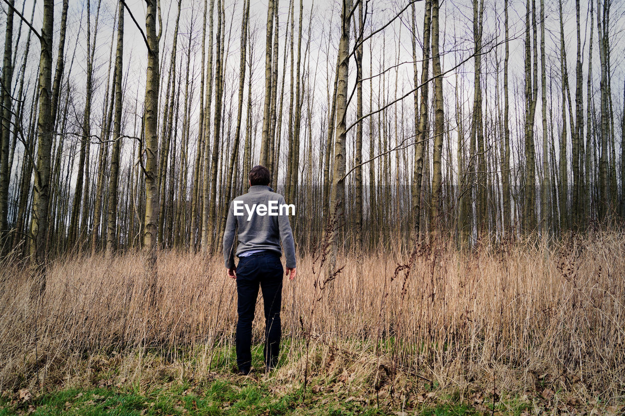 Rear View Of Man Standing Against Bare Trees In Forest
