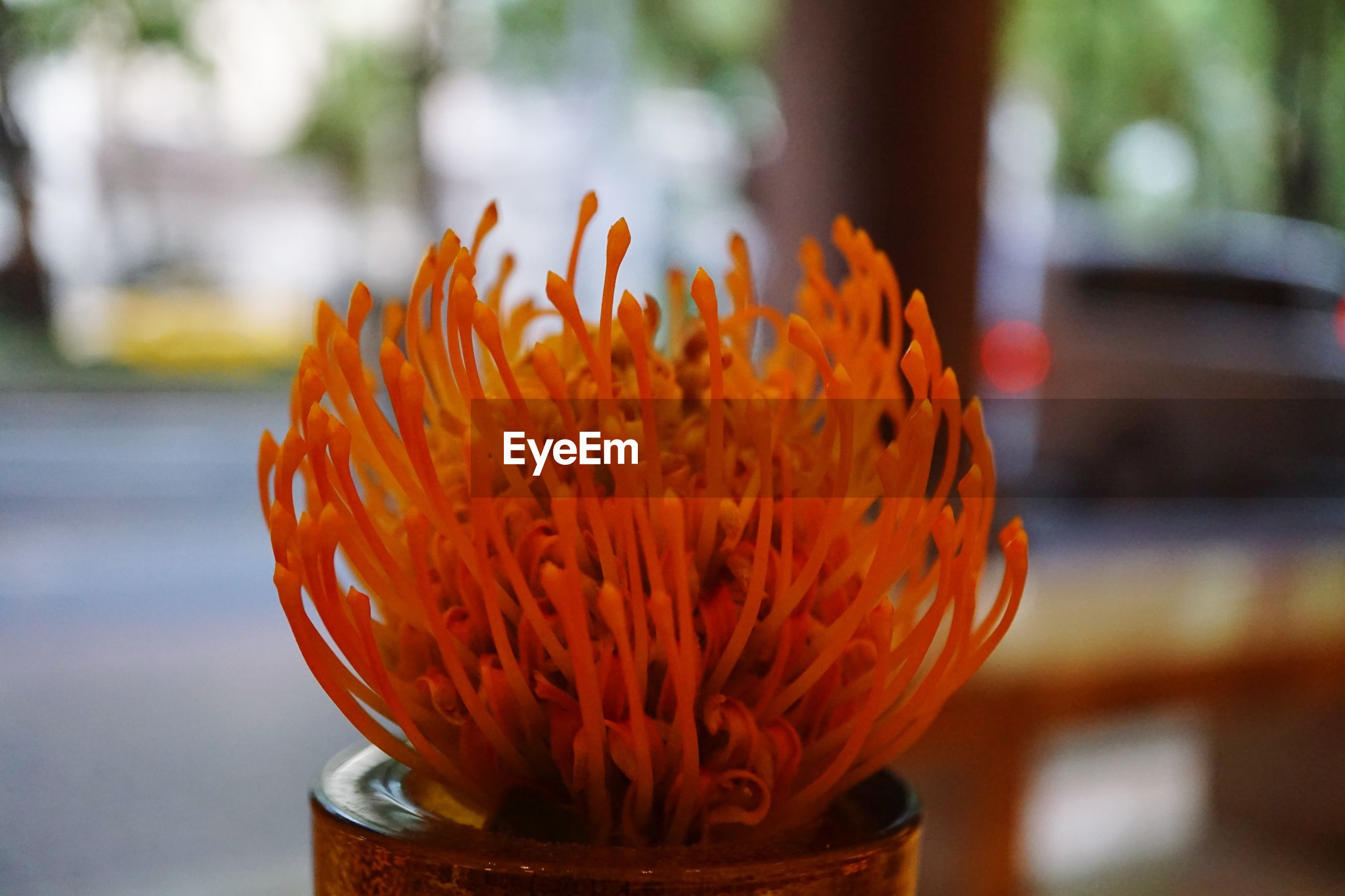 flowering plant, flower, focus on foreground, close-up, orange color, fragility, vulnerability, flower head, plant, freshness, petal, day, inflorescence, beauty in nature, no people, nature, outdoors, growth, selective focus, botany, pollen, orange