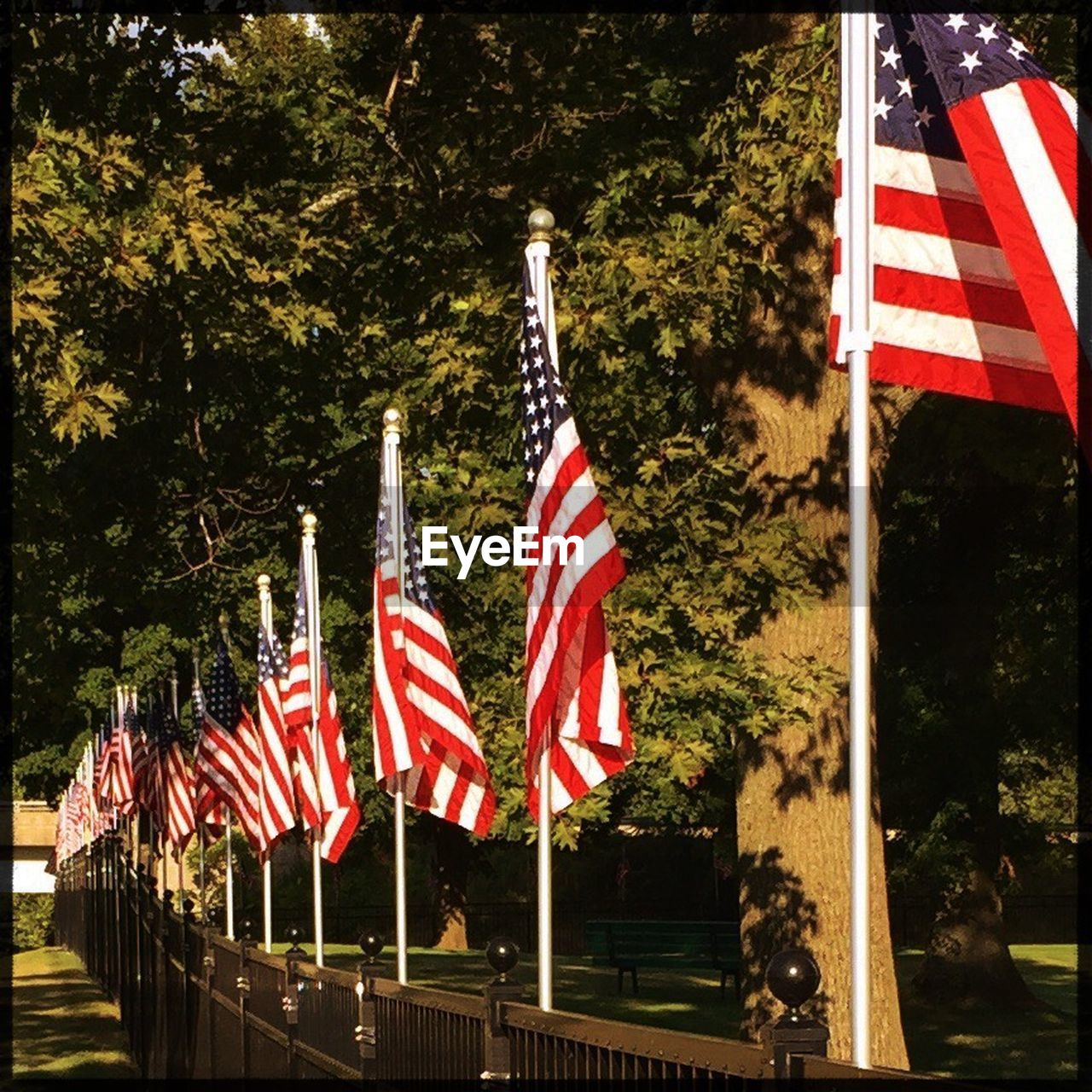 flag, patriotism, stars and stripes, striped, tree, independence, flag pole, pride, no people, outdoors, day