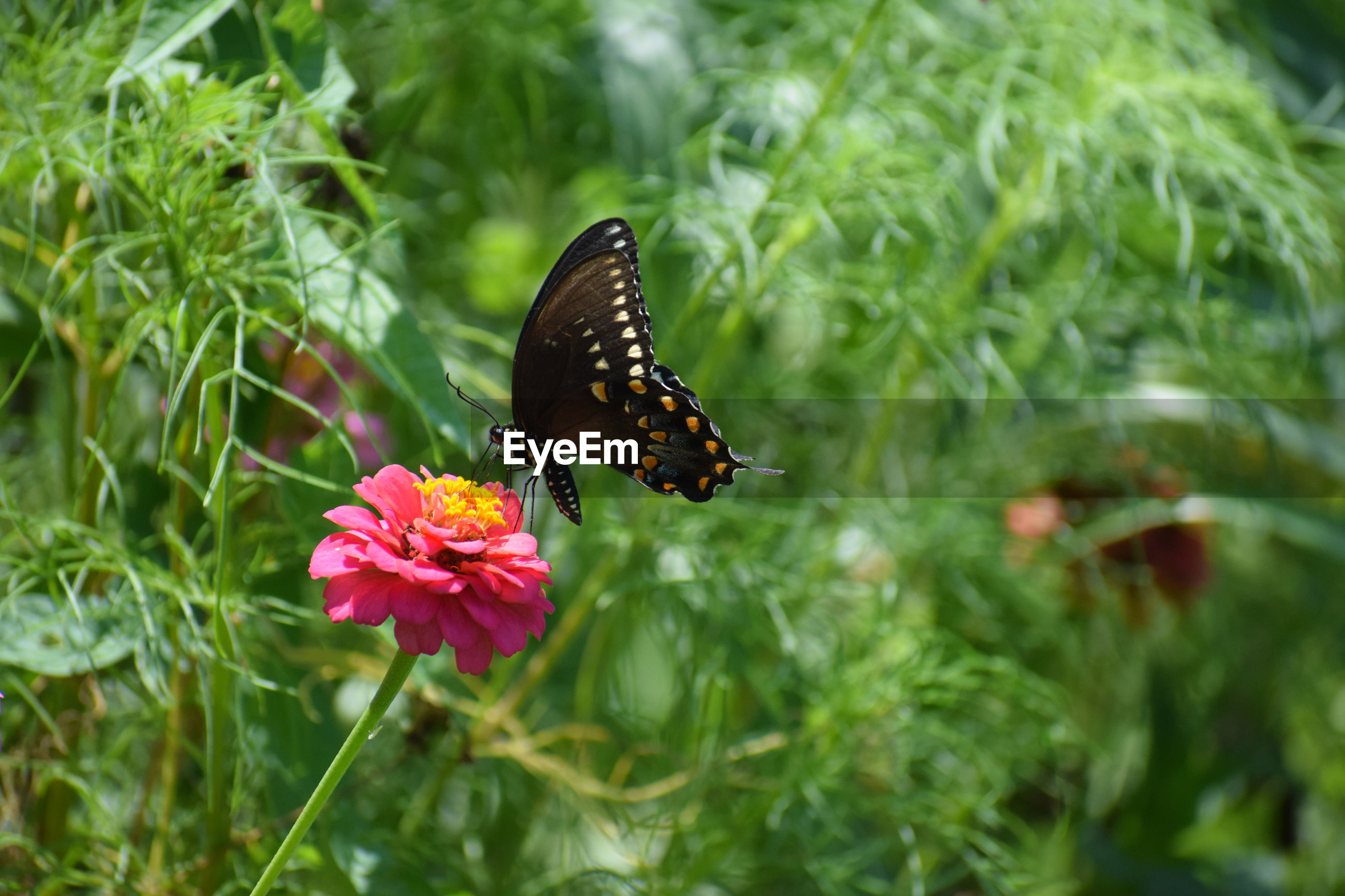 Butterfly pollinating on flower
