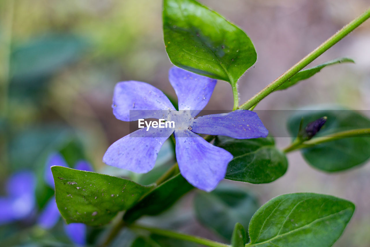 leaf, green color, beauty in nature, nature, drop, growth, flower, fragility, plant, day, outdoors, petal, freshness, no people, water, close-up, flower head, periwinkle