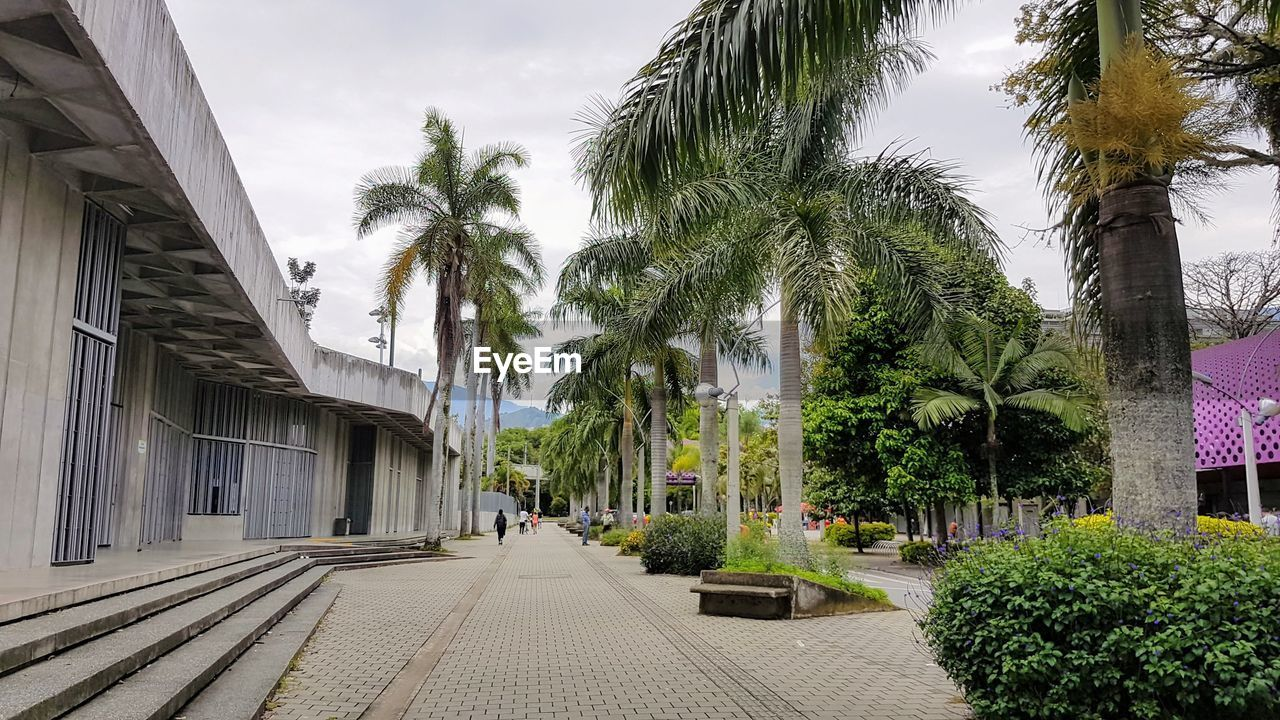plant, tree, tropical climate, palm tree, architecture, sky, built structure, building exterior, nature, building, street, direction, footpath, growth, city, the way forward, day, no people, green color, cloud - sky, outdoors, treelined, coconut palm tree, tropical tree