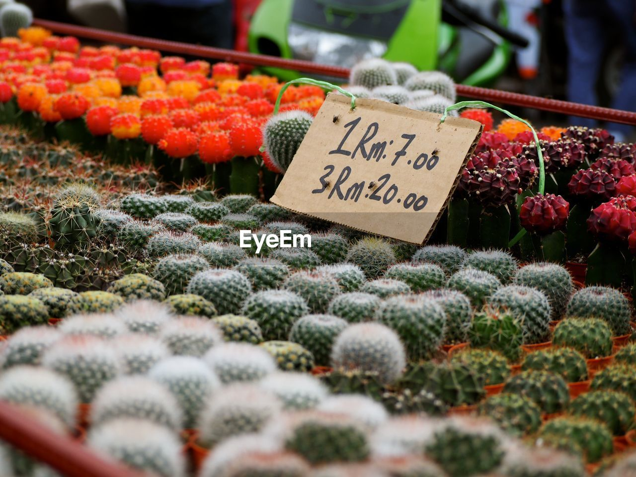 Potted Cacti For Sale At Market