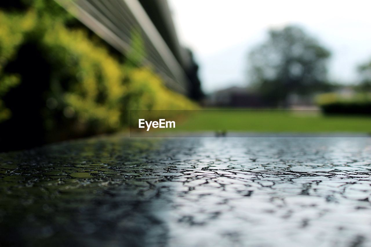selective focus, surface level, day, no people, close-up, plant, outdoors, nature, tree, footpath, city, direction, wet, the way forward, street, wood - material, water, architecture, rain, road