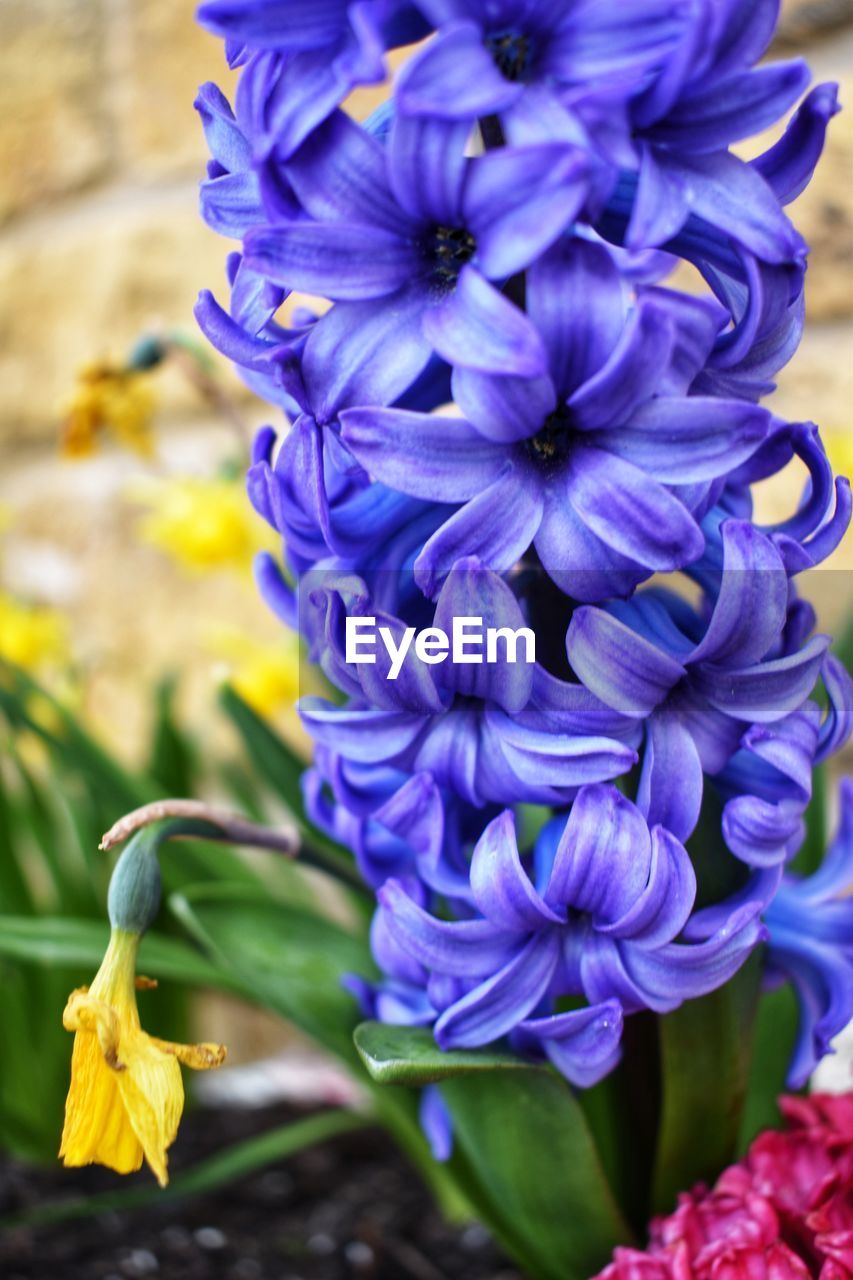flowering plant, flower, plant, fragility, vulnerability, beauty in nature, freshness, close-up, petal, purple, growth, flower head, inflorescence, nature, day, focus on foreground, no people, selective focus, botany, outdoors, bunch of flowers
