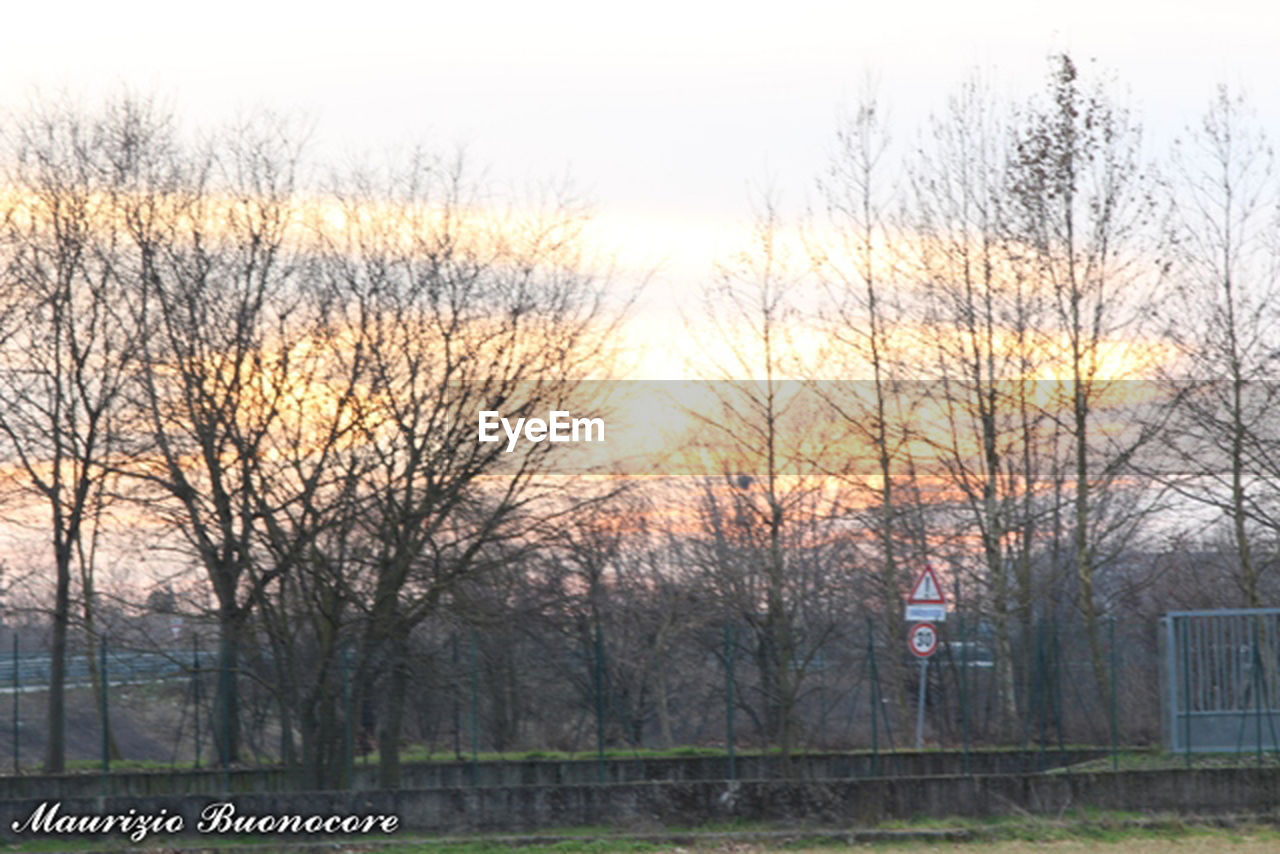 tree, bare tree, communication, tranquility, no people, outdoors, branch, sky, day, nature, grass, beauty in nature