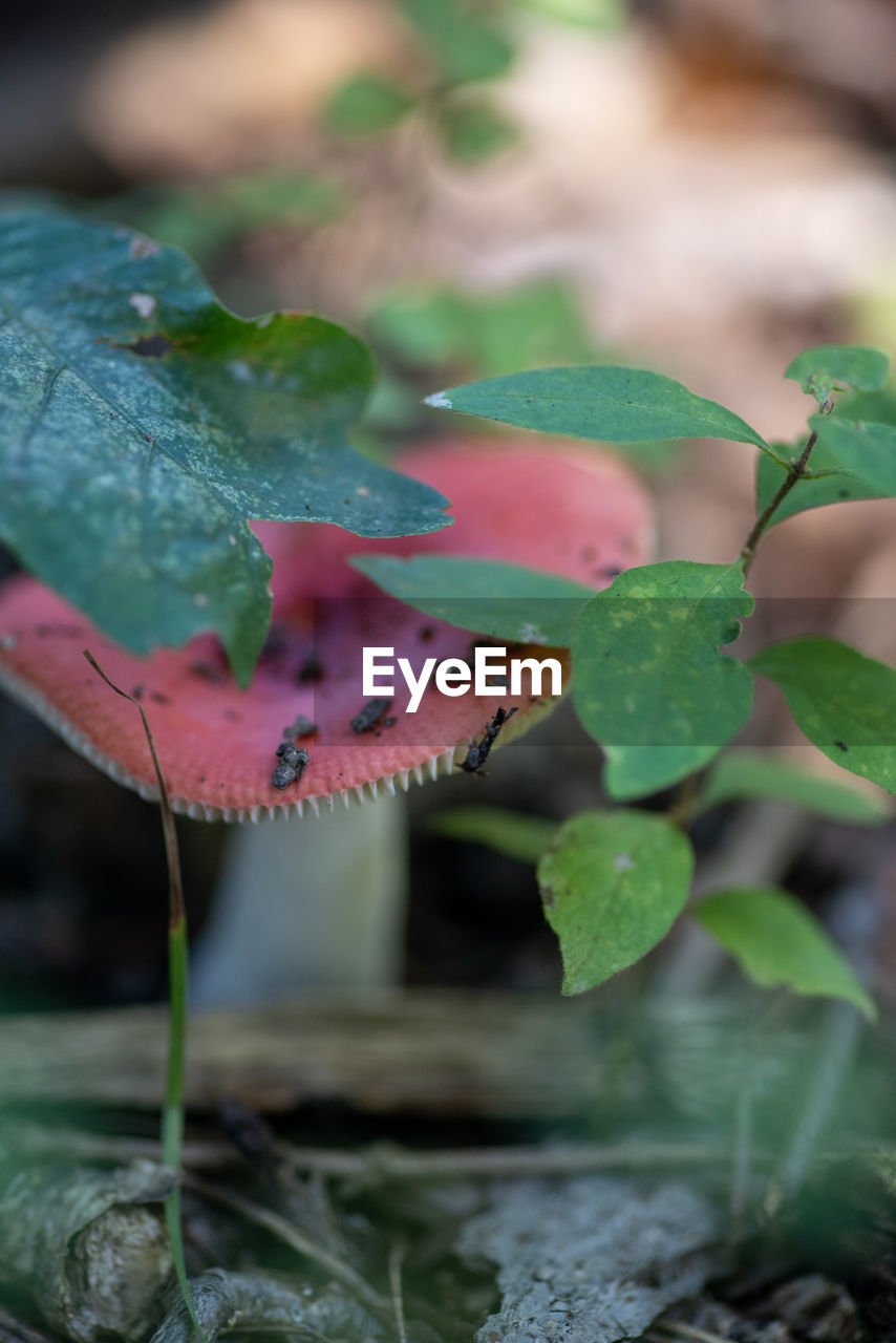 leaf, plant part, growth, plant, close-up, nature, no people, beauty in nature, selective focus, green color, water, day, focus on foreground, vegetable, outdoors, food, wet, drop, land, leaves