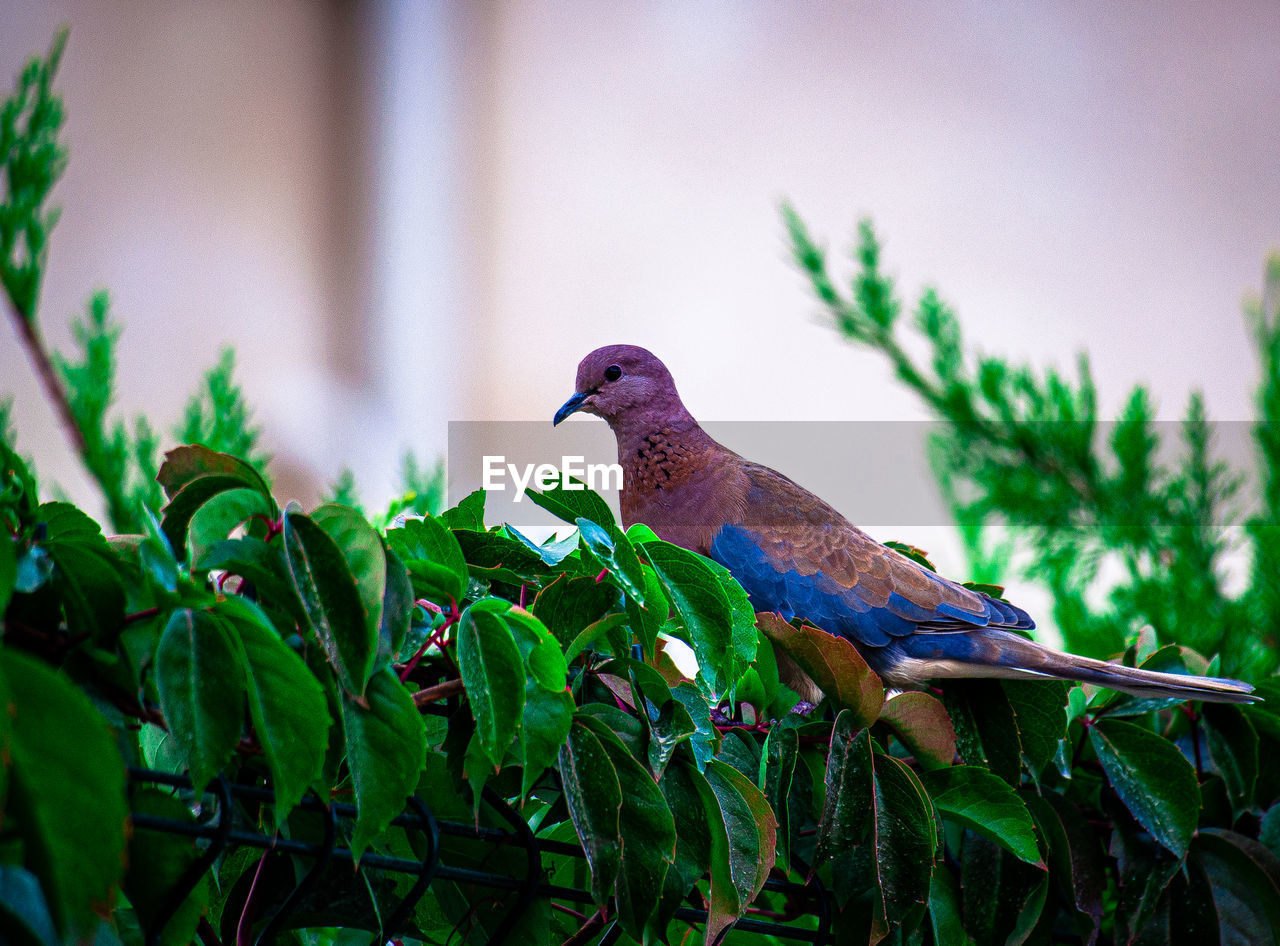 VIEW OF BIRD PERCHING ON A PLANT