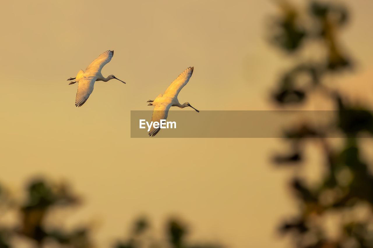 animals in the wild, flying, animal wildlife, animal themes, bird, vertebrate, animal, group of animals, mid-air, spread wings, no people, selective focus, nature, focus on foreground, beauty in nature, sky, day, motion, plant, zoology