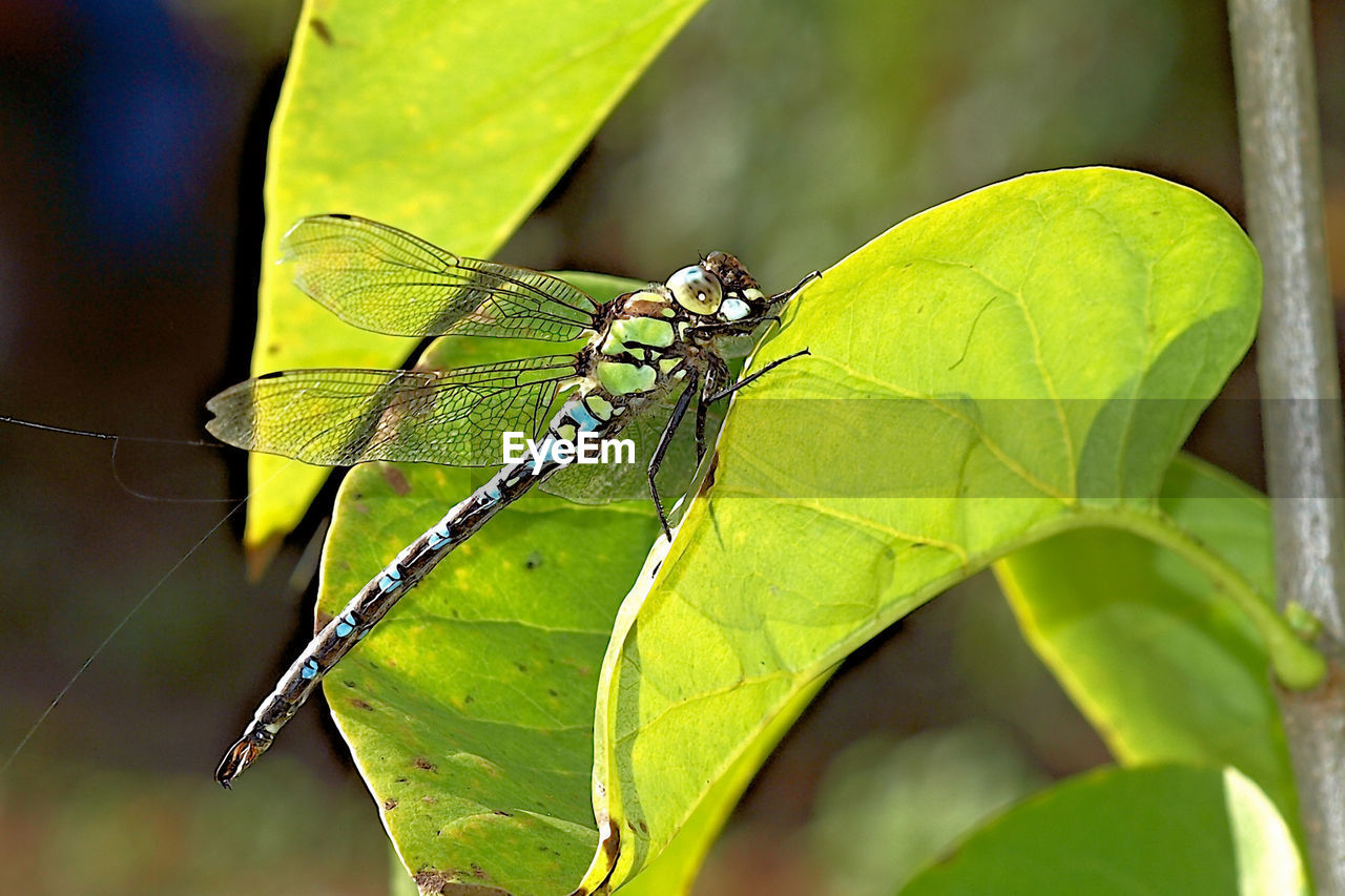 insect, leaf, animals in the wild, animal themes, one animal, green color, animal wildlife, focus on foreground, outdoors, nature, day, no people, close-up, plant, growth, damselfly, beauty in nature