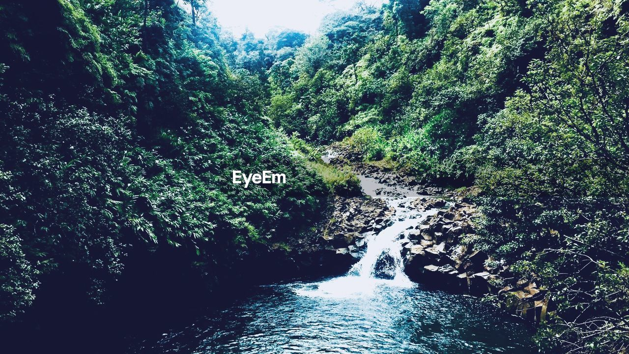nature, forest, beauty in nature, tree, waterfall, flowing water, water, scenics, river, motion, tranquility, tranquil scene, lush foliage, day, no people, outdoors, sky