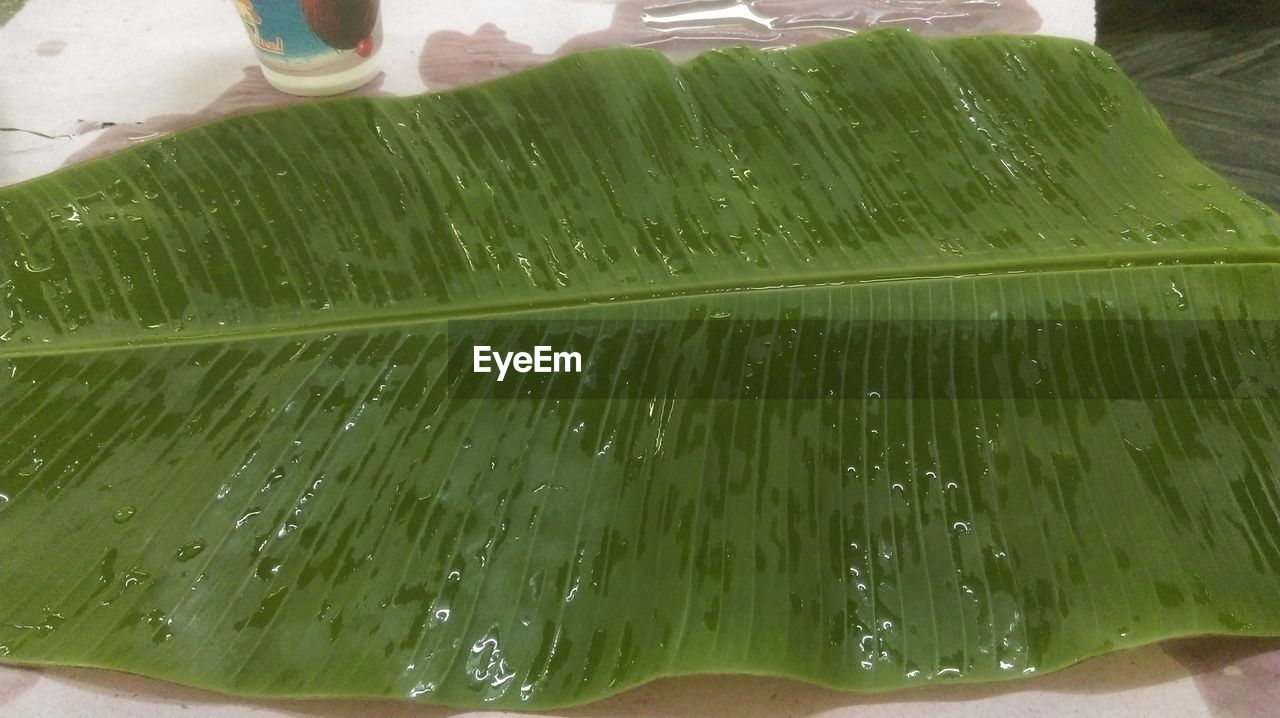 water, green color, wet, drop, freshness, close-up, leaf, banana leaf, purity, indoors, no people, nature, day