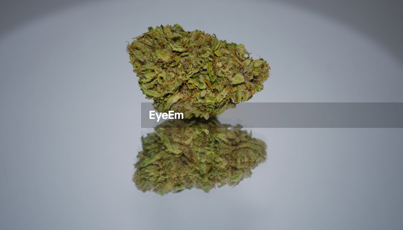 cannabis plant, marijuana - herbal cannabis, green color, healthcare and medicine, herbal medicine, no people, table, close-up, studio shot, alternative medicine, leaf, growth, medical cannabis, white background, day