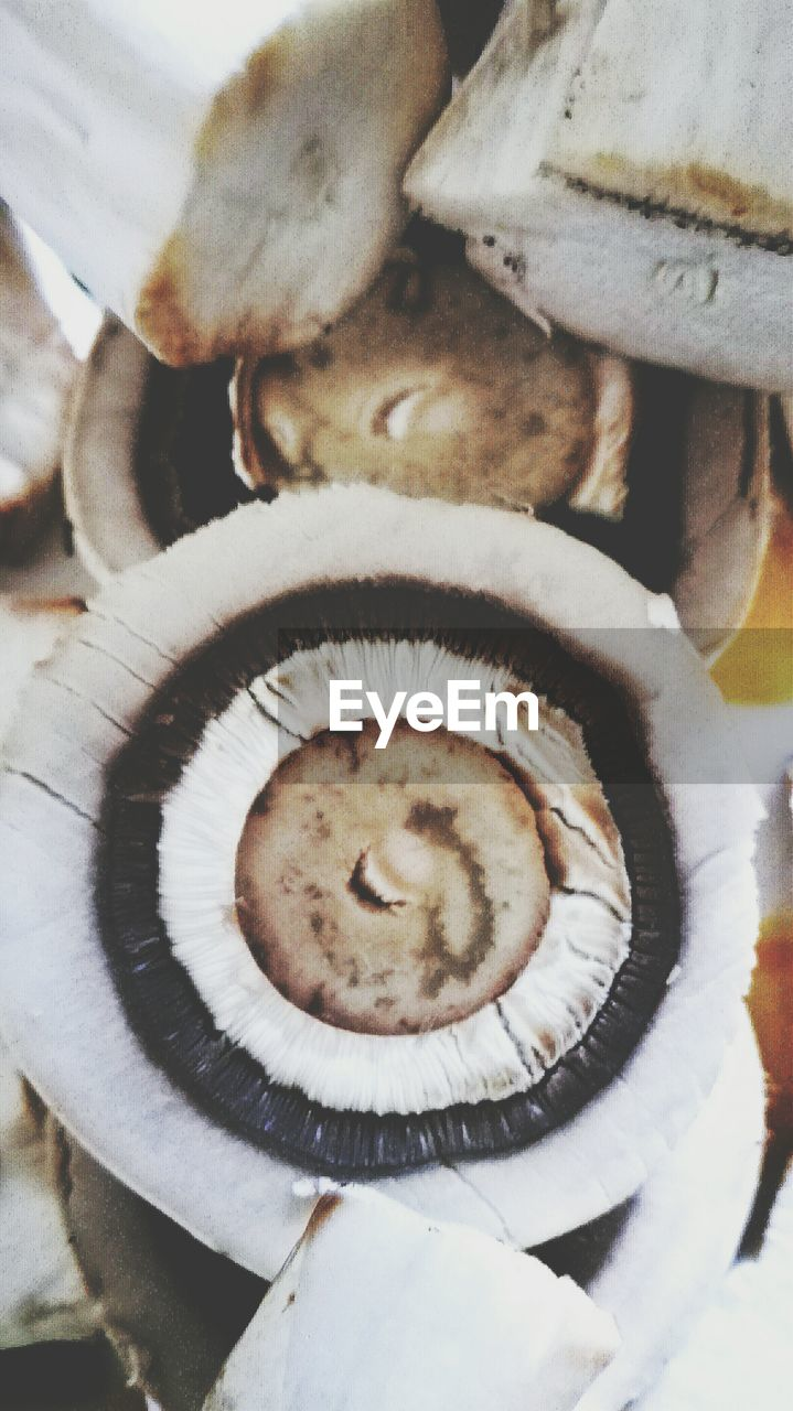 close-up, freshness, food and drink, no people, food, healthy eating, vegetable, indoors, mushroom, day, fungus, fragility