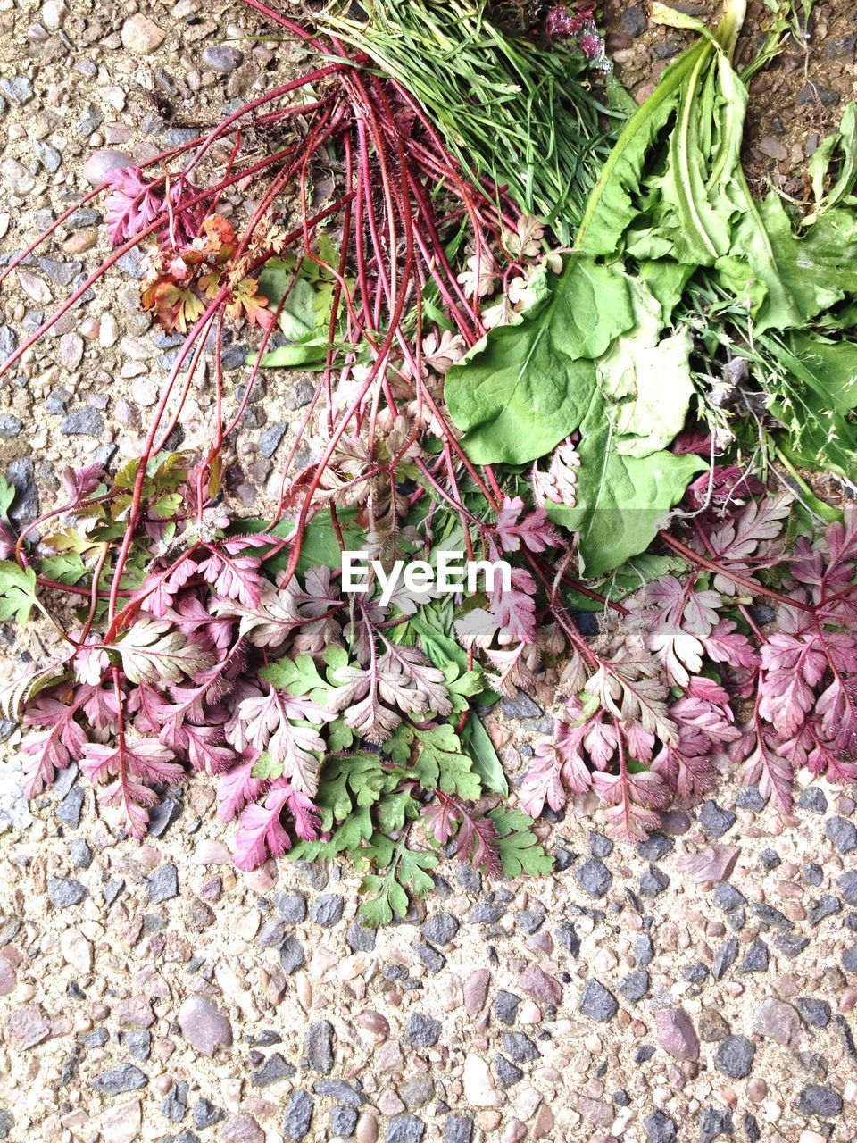 green color, no people, leaf, high angle view, plant, day, nature, outdoors, growth, pink color, flower, fragility, close-up, freshness