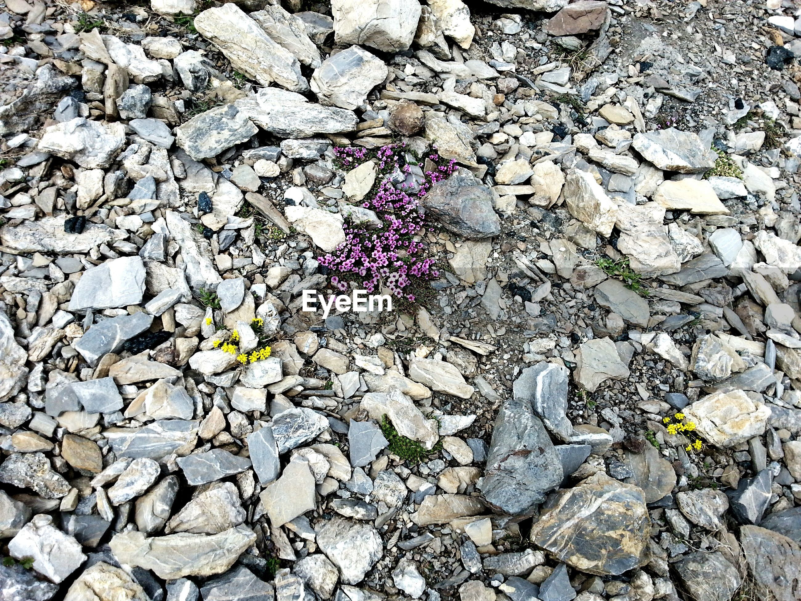 stone - object, textured, stone wall, high angle view, stone, rock - object, nature, full frame, abundance, backgrounds, growth, day, flower, fragility, outdoors, pebble, rough, leaf, no people, plant