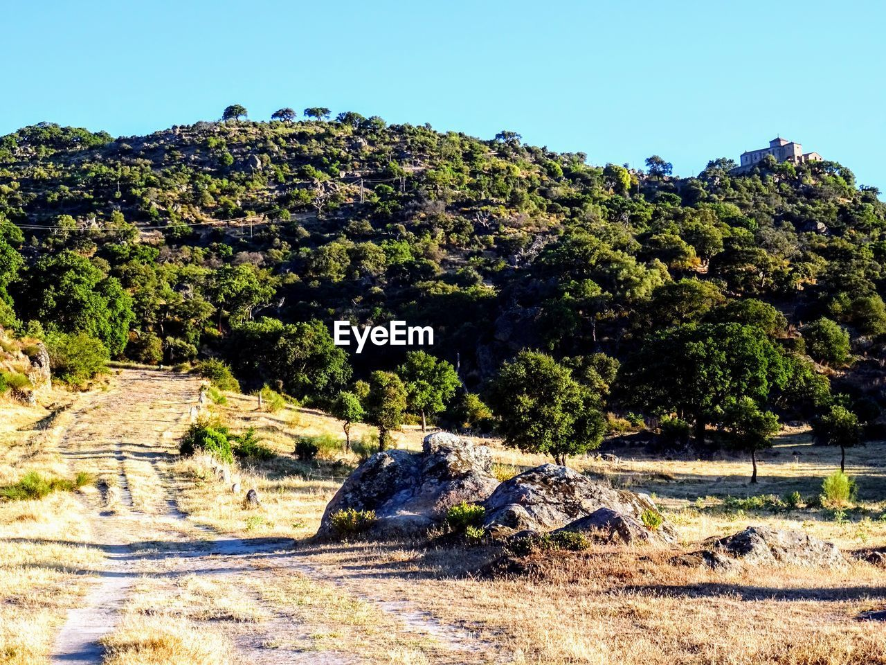 tree, plant, sky, growth, nature, sunlight, day, no people, tranquility, beauty in nature, scenics - nature, clear sky, land, tranquil scene, landscape, mountain, green color, environment, rock, non-urban scene, outdoors