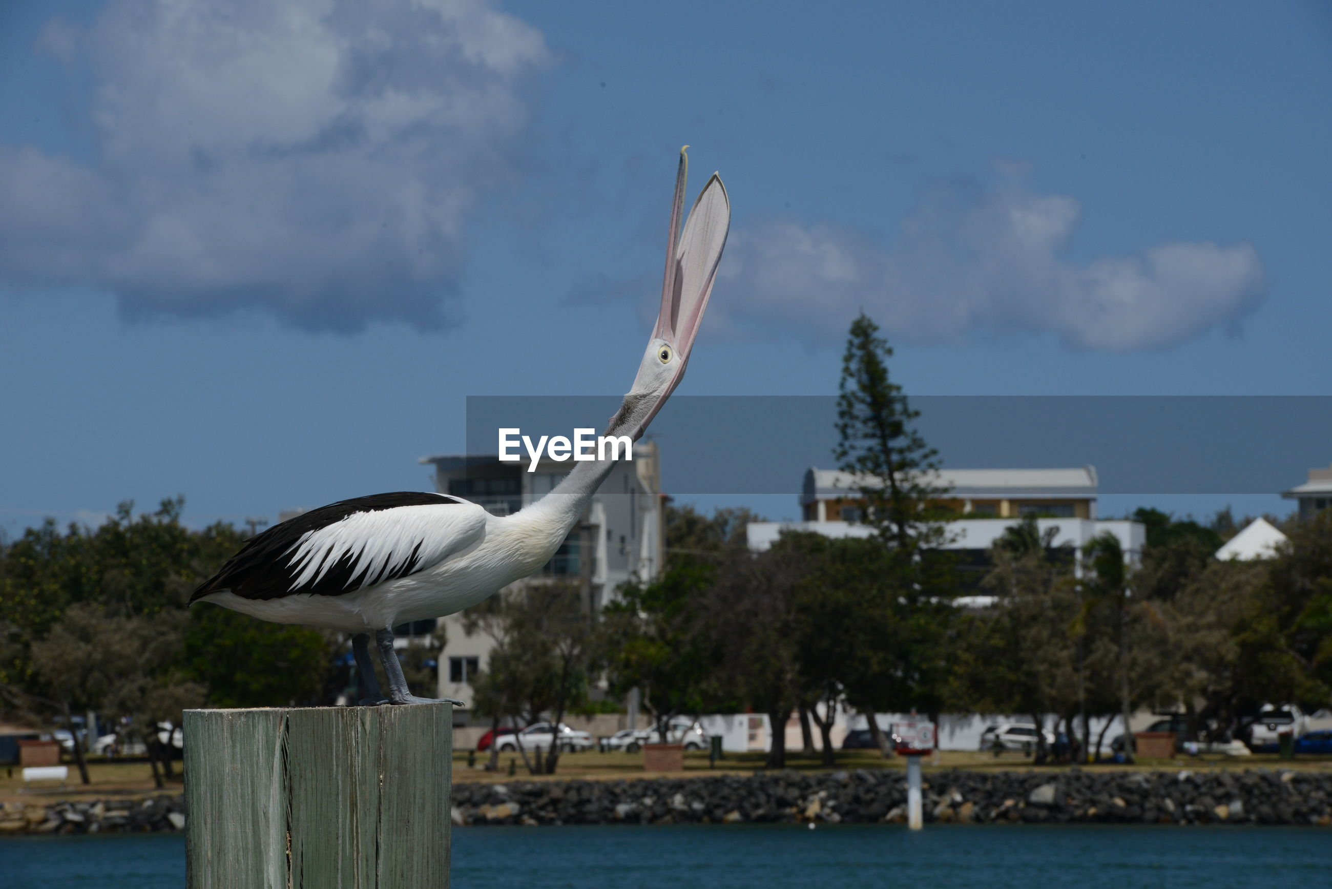 SEAGULL FLYING OVER WOODEN POST AGAINST BUILDING
