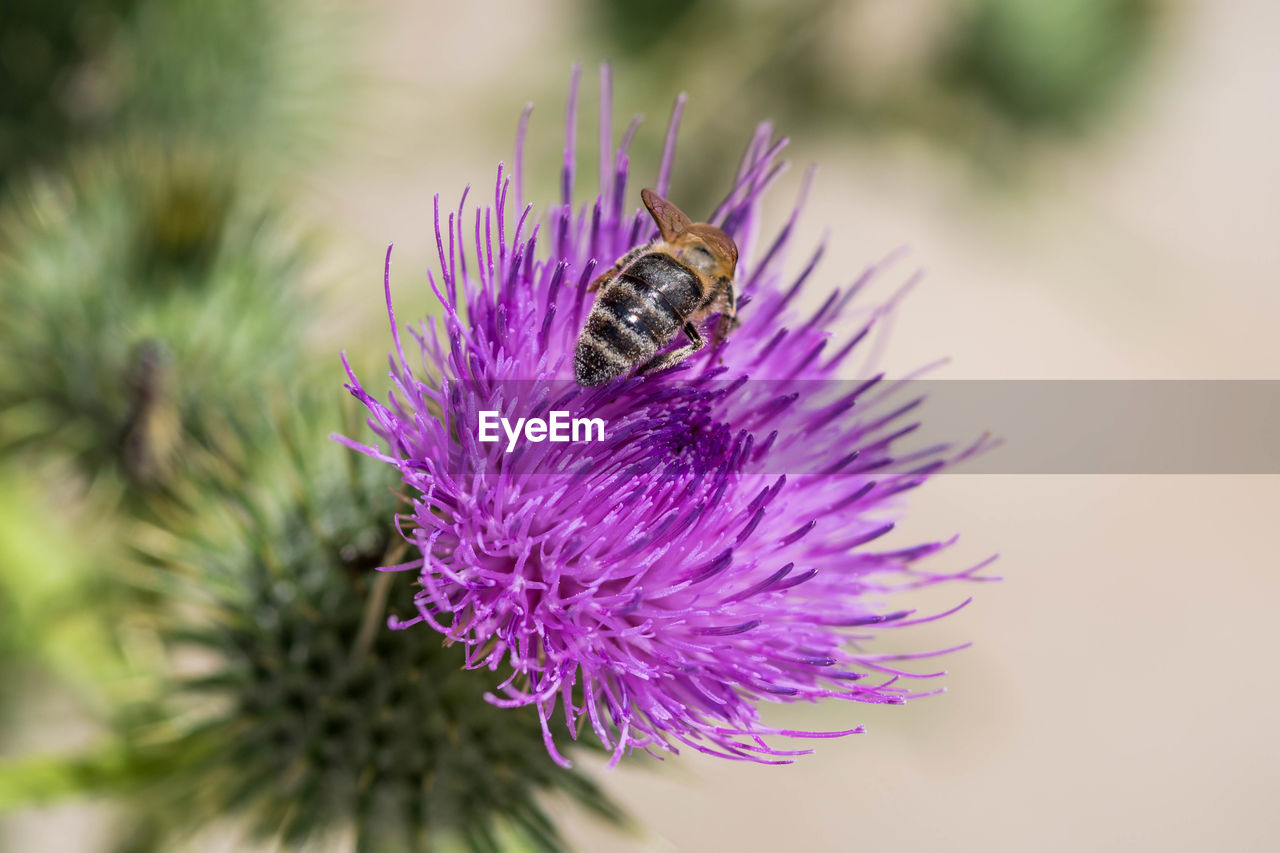 flower, invertebrate, flowering plant, purple, one animal, animal, animals in the wild, close-up, animal themes, animal wildlife, insect, plant, beauty in nature, petal, fragility, bee, freshness, vulnerability, growth, nature, flower head, no people, pollination