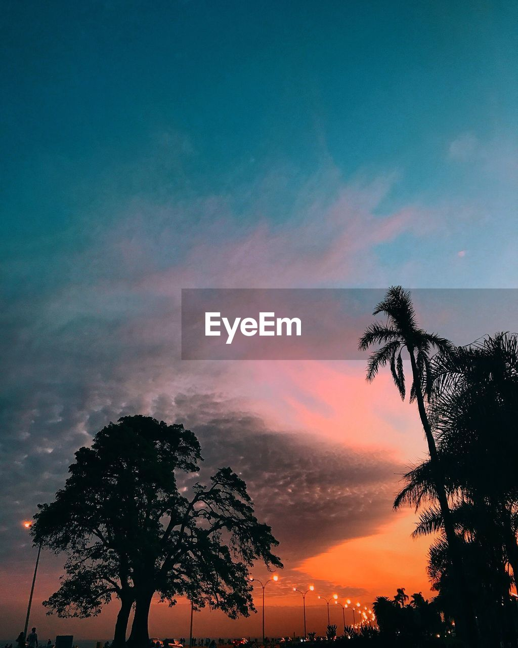 sky, tree, sunset, plant, silhouette, cloud - sky, beauty in nature, scenics - nature, nature, orange color, tranquility, no people, tranquil scene, growth, tropical climate, palm tree, low angle view, outdoors, dramatic sky, idyllic, romantic sky