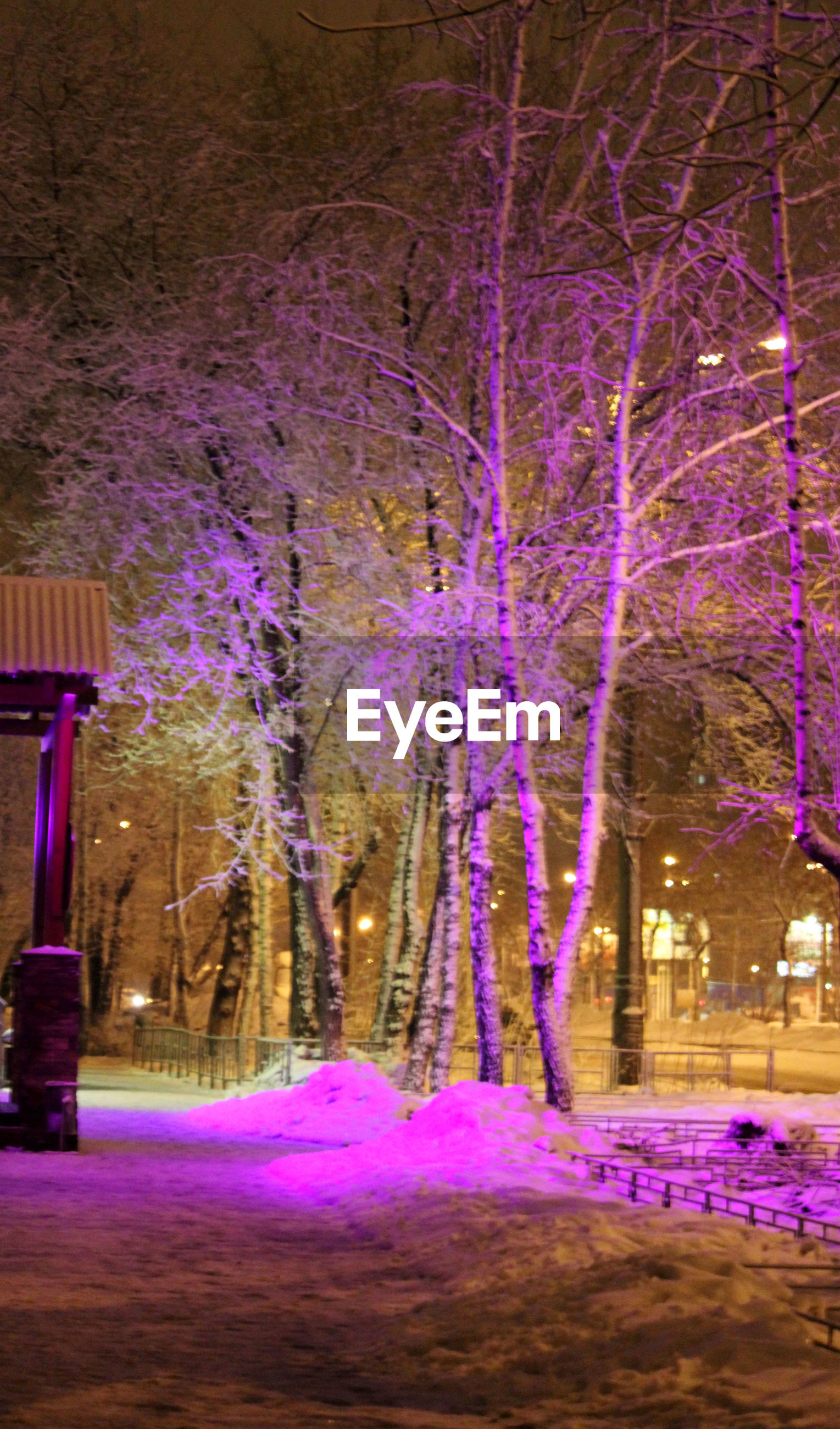 purple, tree, night, illuminated, nature, beauty in nature, flower, built structure, park - man made space, building exterior, pink color, outdoors, multi colored, no people, branch, growth, bare tree, architecture, blue, tranquility