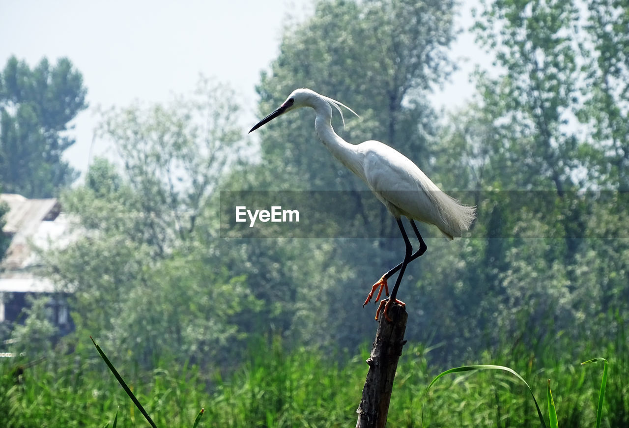 animal wildlife, animal, animal themes, animals in the wild, vertebrate, one animal, tree, bird, plant, perching, focus on foreground, nature, egret, no people, day, great egret, green color, land, outdoors, white color, crane - bird, beak