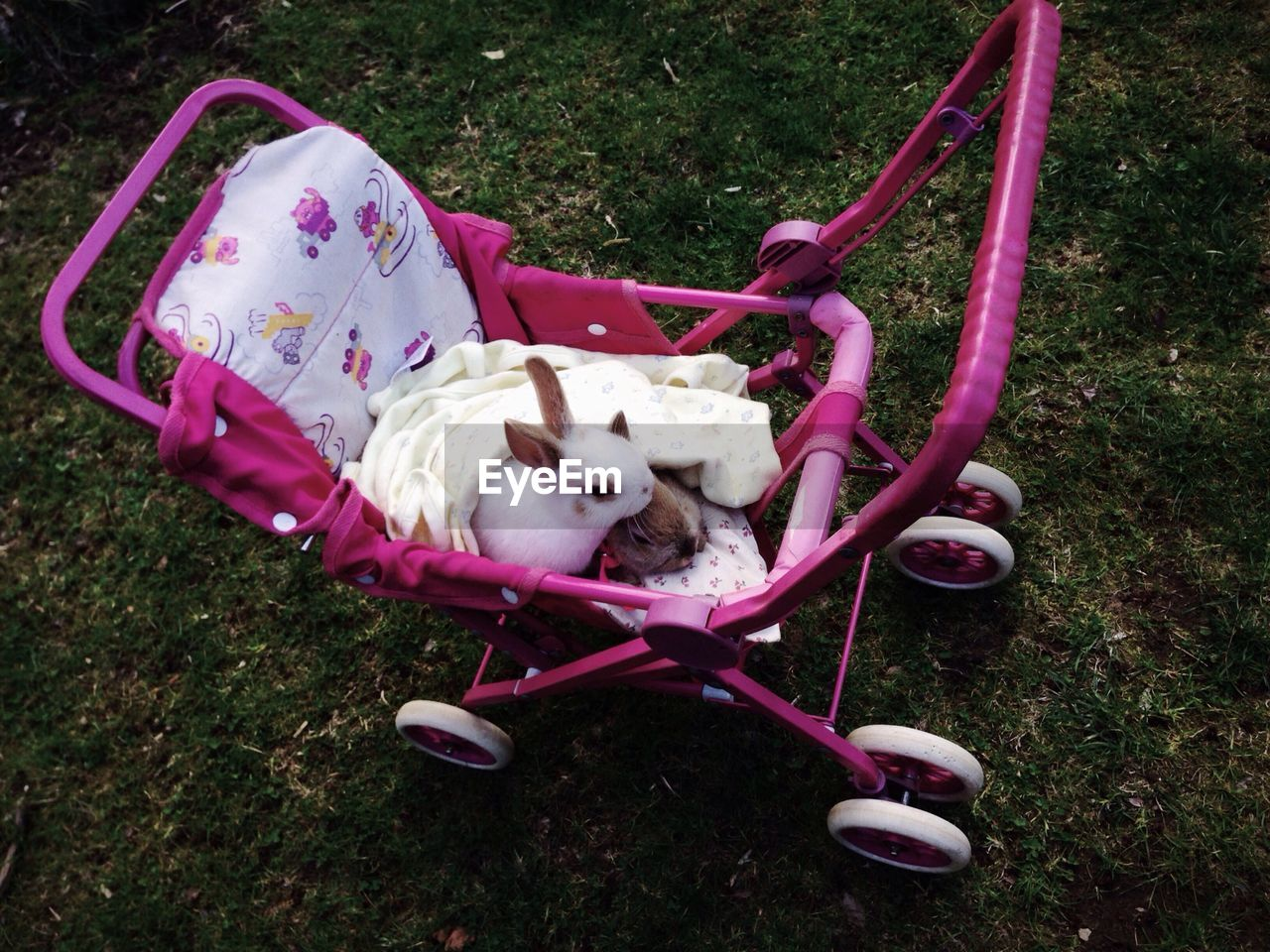 High angle view of rabbits in baby carriage at park