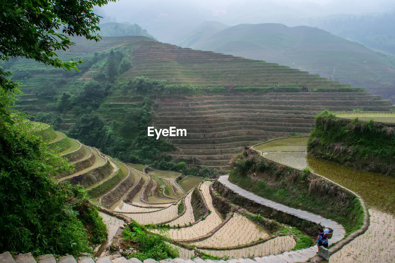landscape, environment, scenics - nature, mountain, plant, beauty in nature, high angle view, agriculture, nature, tranquil scene, tranquility, day, tree, land, rural scene, travel destinations, terraced field, field, growth, green color, mountain range, outdoors, no people, ancient civilization