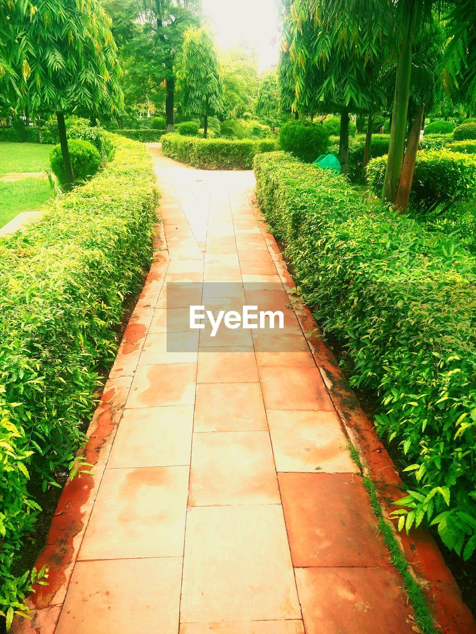 growth, green color, plant, the way forward, tree, nature, footpath, grass, tranquility, day, beauty in nature, no people, tranquil scene, outdoors, walkway, field, agriculture, scenics, landscape, freshness