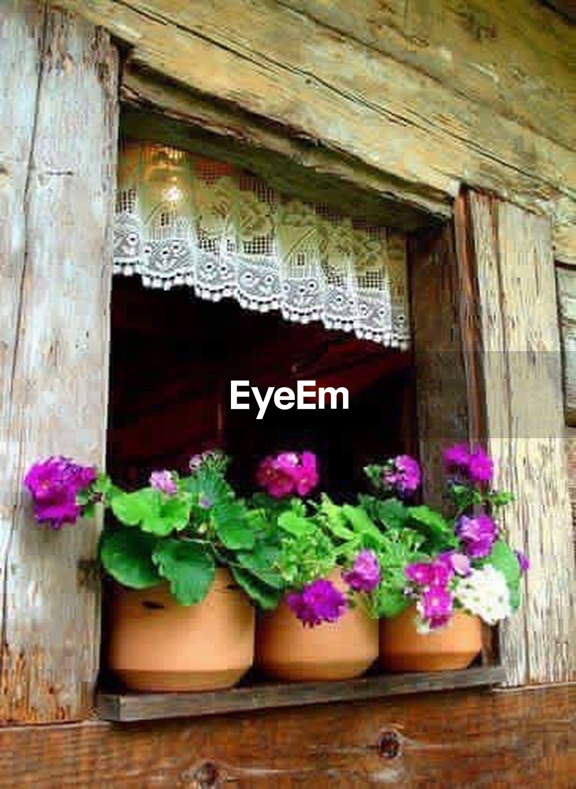 flower, indoors, freshness, wood - material, fragility, potted plant, plant, decoration, house, architecture, built structure, window, growth, variation, vase, no people, bouquet, petal, nature, arrangement