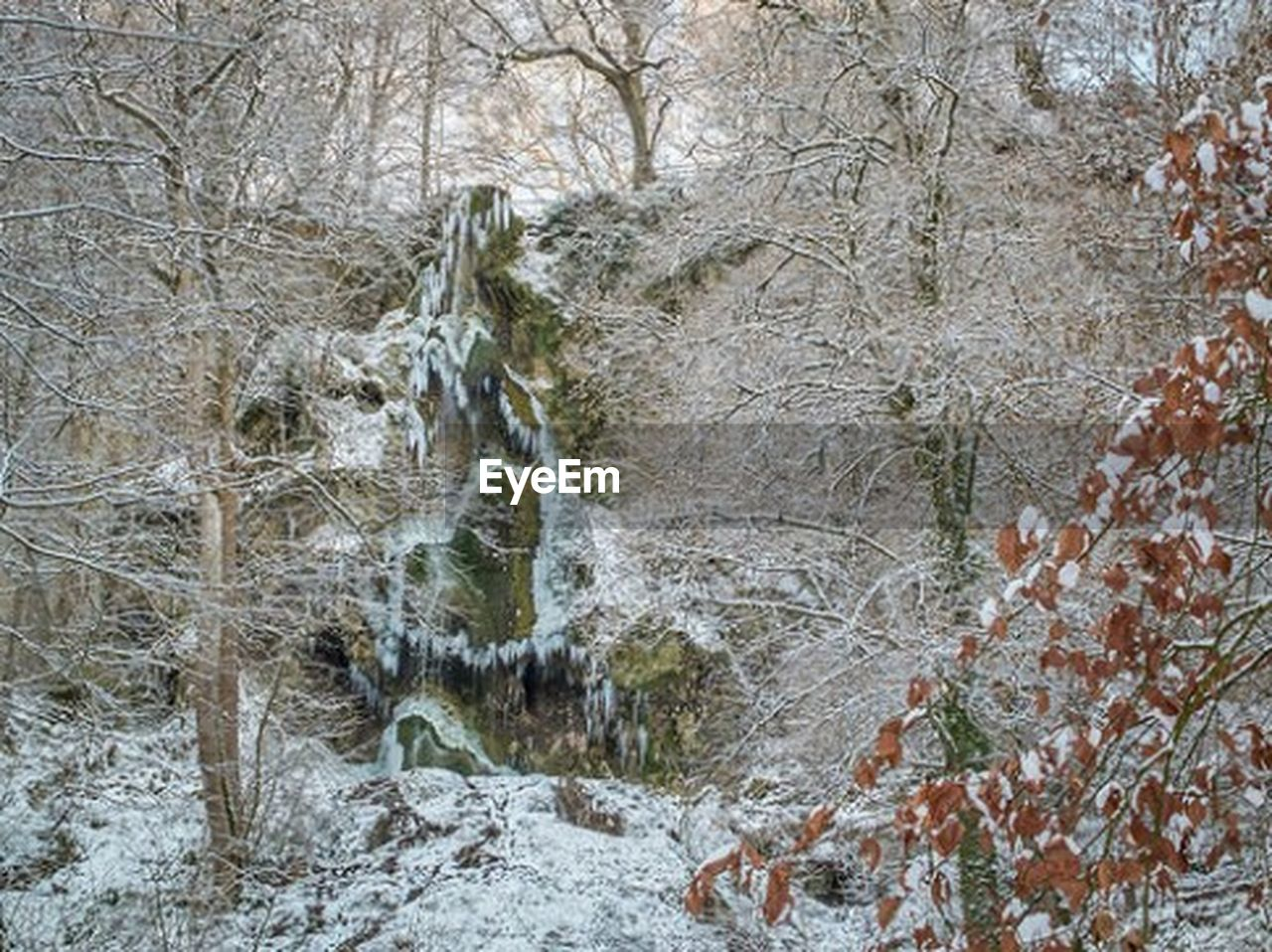bare tree, tree, forest, winter, nature, branch, cold temperature, no people, outdoors, snow, beauty in nature, day, water, tree trunk, tranquility, scenics, waterfall, animal themes, mammal
