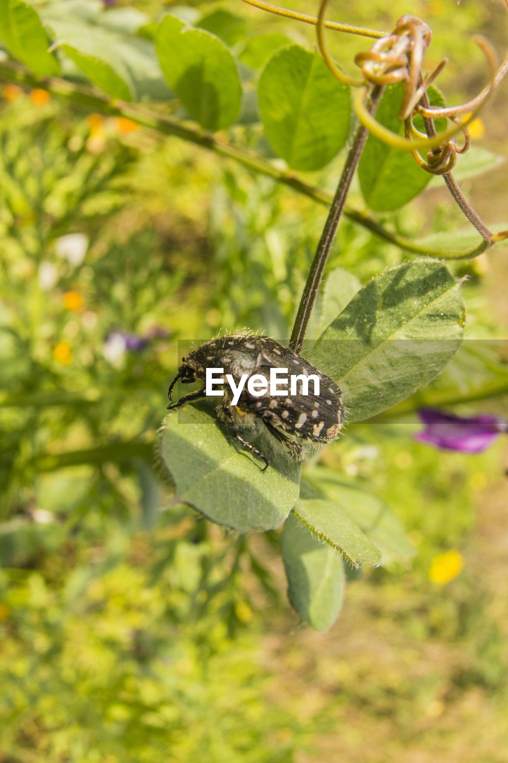 Close-up of beetle on leaf