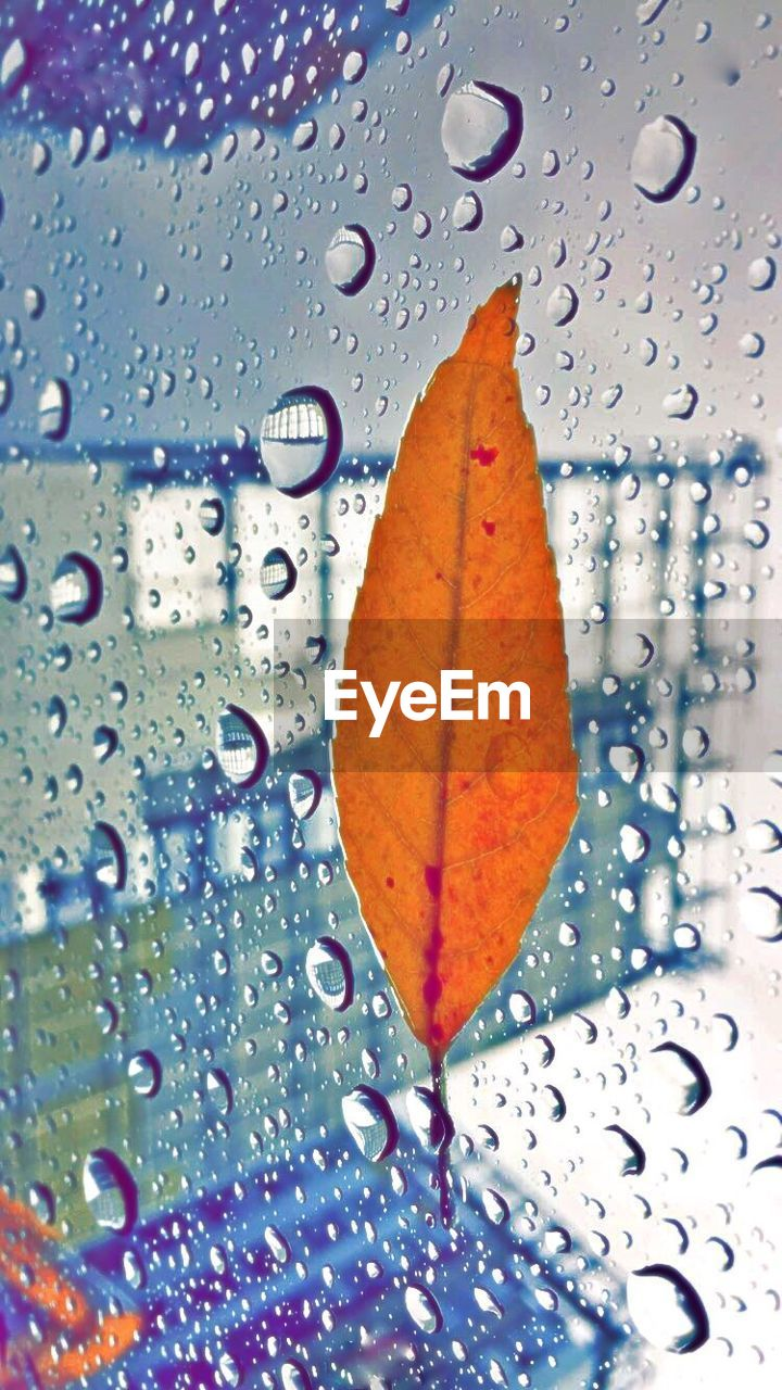 drop, water, leaf, wet, raindrop, rain, close-up, weather, autumn, window, full frame, backgrounds, no people, purity, indoors, nature, freshness, day, fragility, beauty in nature, maple