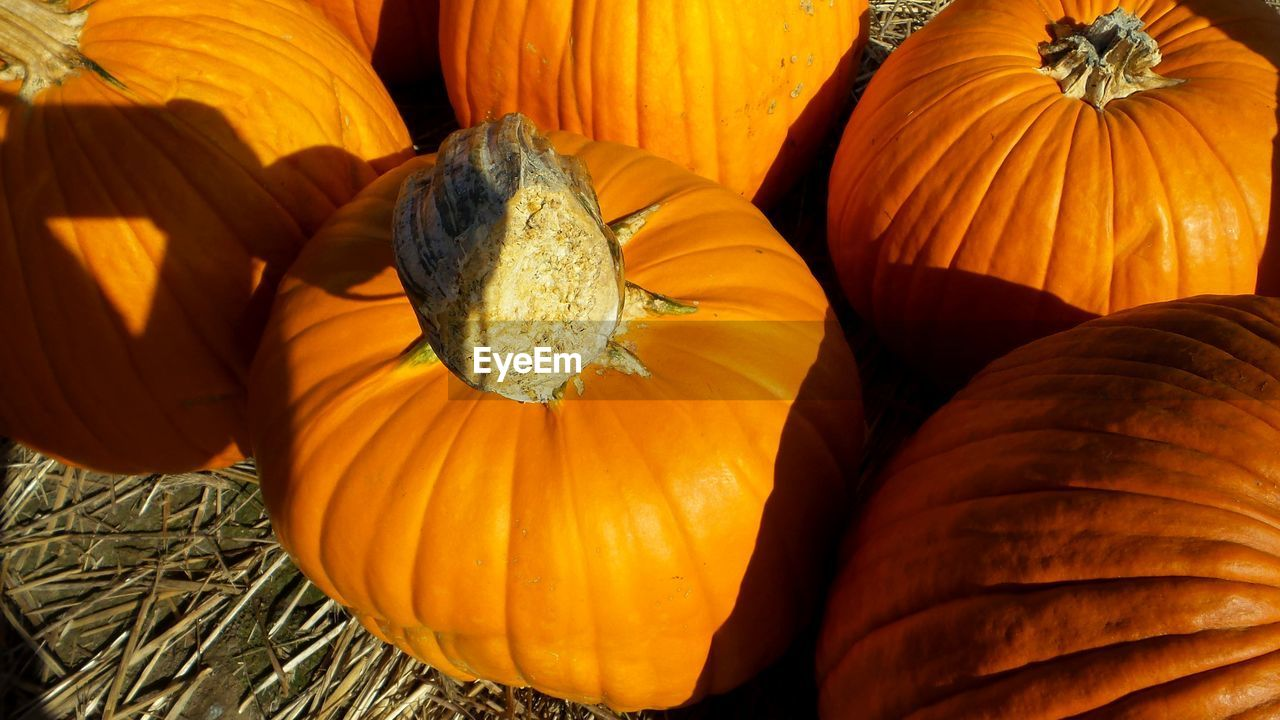 freshness, pumpkin, orange color, food and drink, food, no people, close-up, wellbeing, vegetable, healthy eating, still life, high angle view, nature, day, sunlight, raw food, plant, halloween, indoors