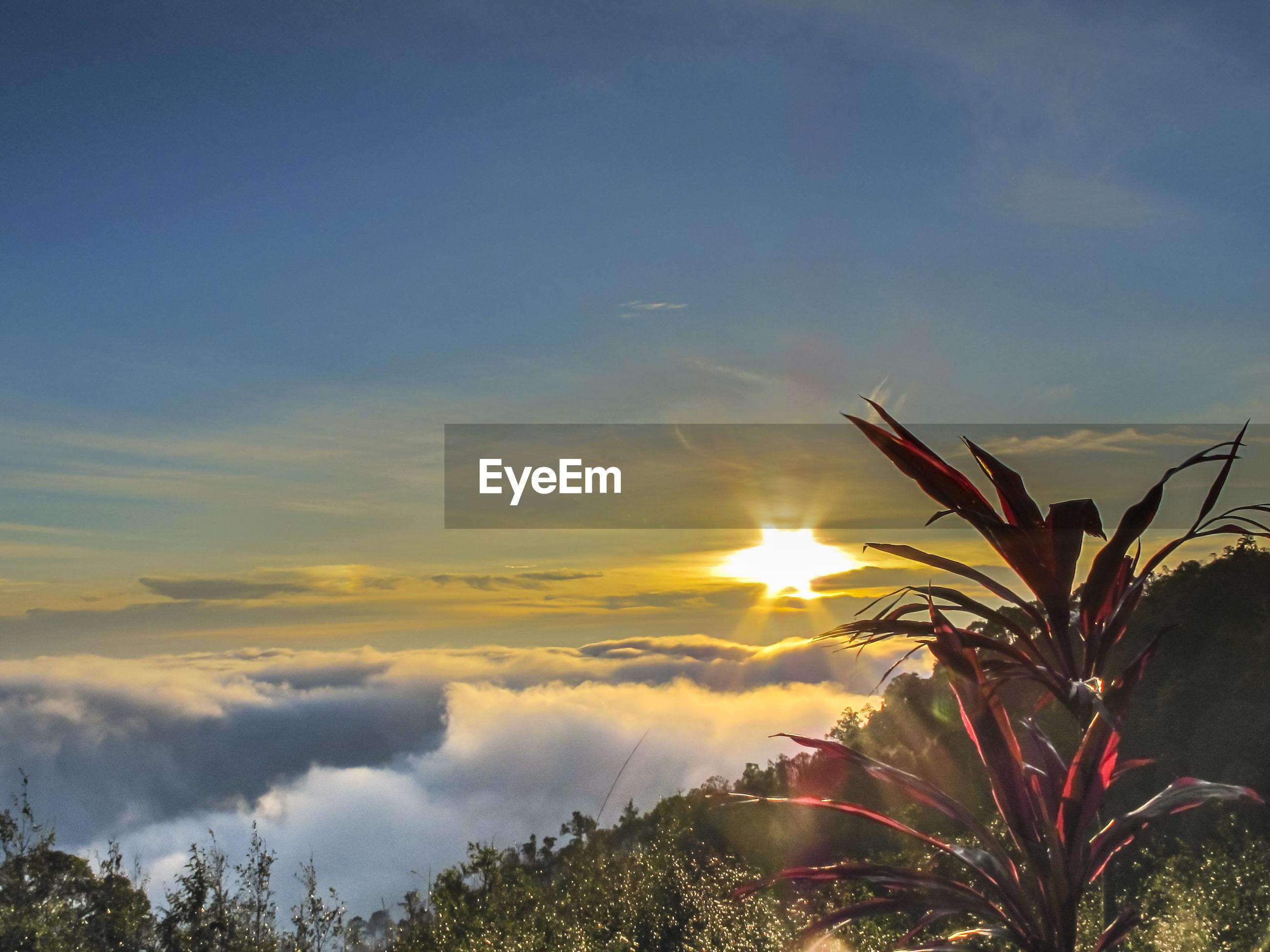 Beautiful landscape at khun sathan national park in nan, thailand. sea of mist at dawn,