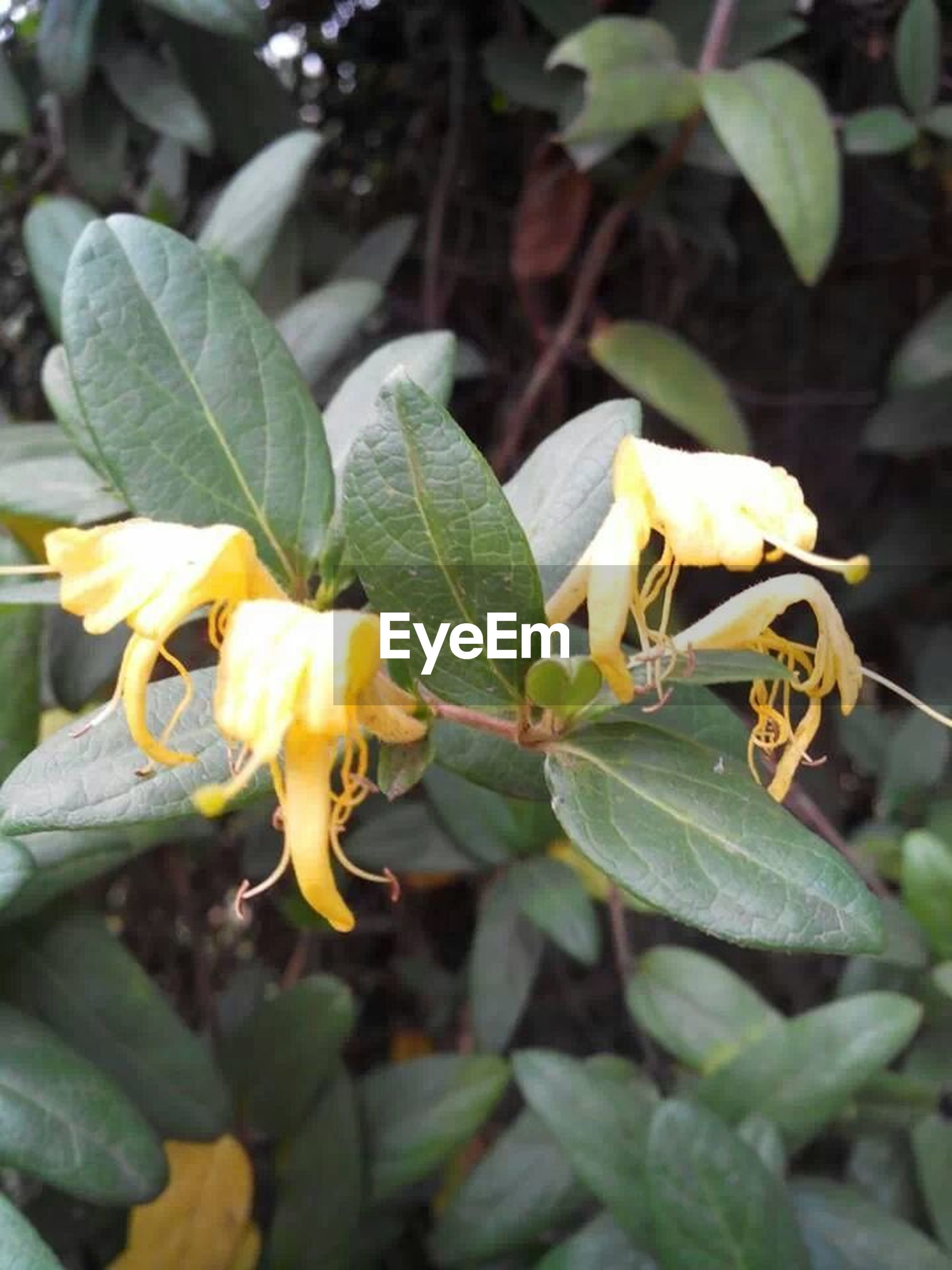 flower, leaf, freshness, yellow, petal, growth, fragility, close-up, plant, focus on foreground, flower head, beauty in nature, nature, blooming, green color, outdoors, day, no people, stem, in bloom