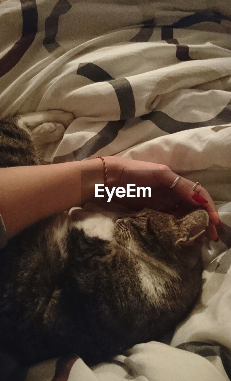pets, domestic animals, domestic cat, one animal, animal themes, sleeping, indoors, bed, mammal, feline, lying down, real people, relaxation, eyes closed, dog, comfortable, one person, home interior, human hand, bedroom, human body part, bonding, lifestyles, close-up, friendship, day, people