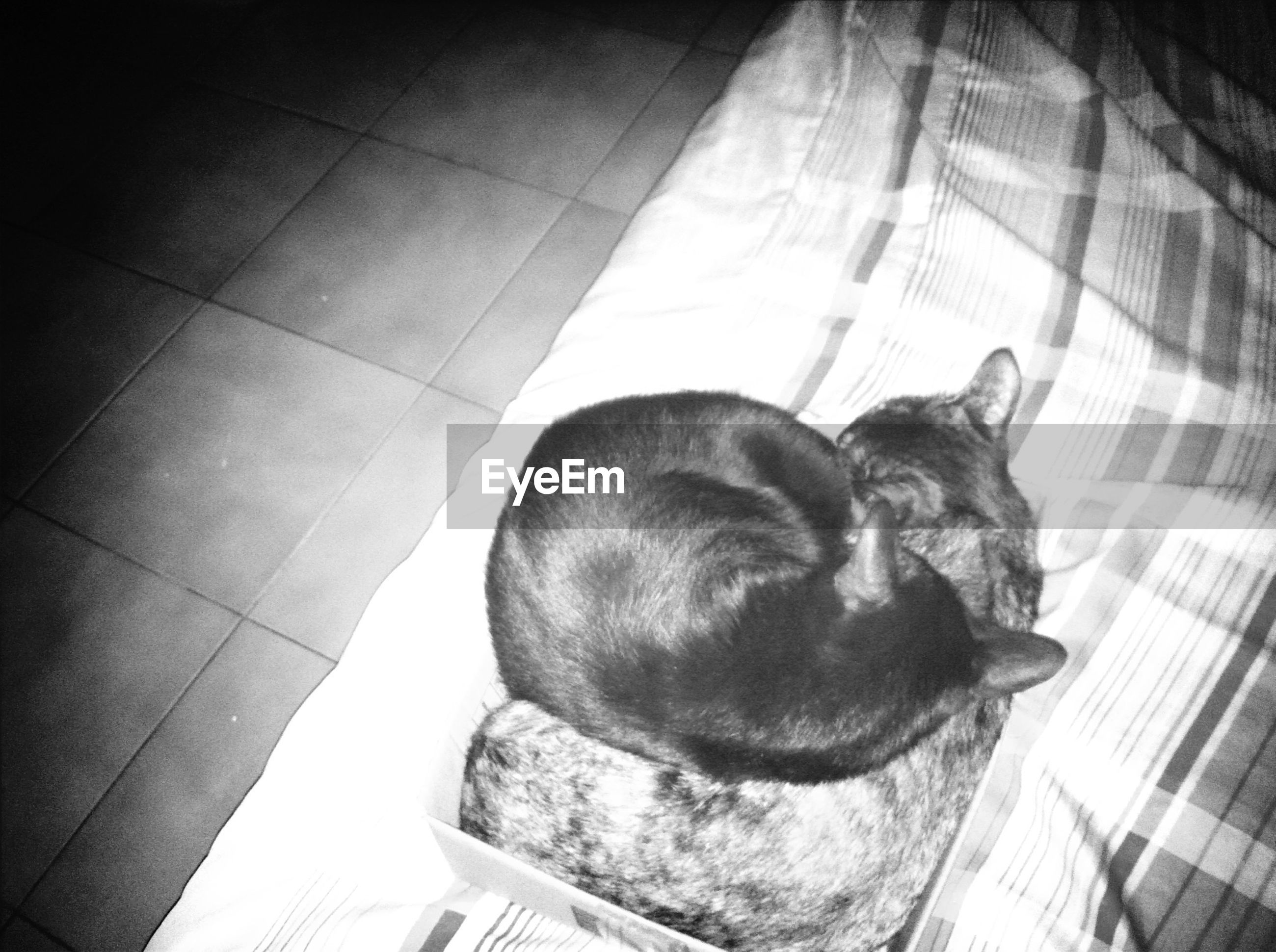 indoors, animal themes, pets, one animal, high angle view, domestic animals, relaxation, tiled floor, home interior, dog, no people, sleeping, mammal, low angle view, resting, day, flooring, sunlight, close-up, home
