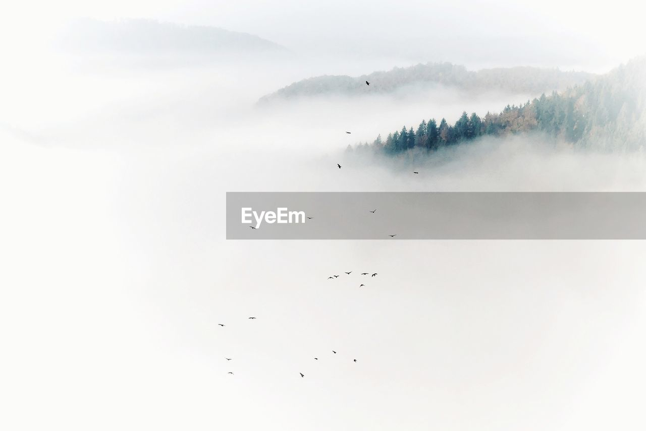 Birds flying over mountains in foggy weather