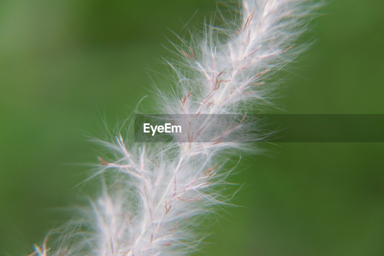 plant, close-up, growth, beauty in nature, fragility, vulnerability, no people, nature, flower, day, freshness, flowering plant, focus on foreground, green color, softness, selective focus, outdoors, dandelion, tranquility, botany, flower head, dandelion seed, spiky