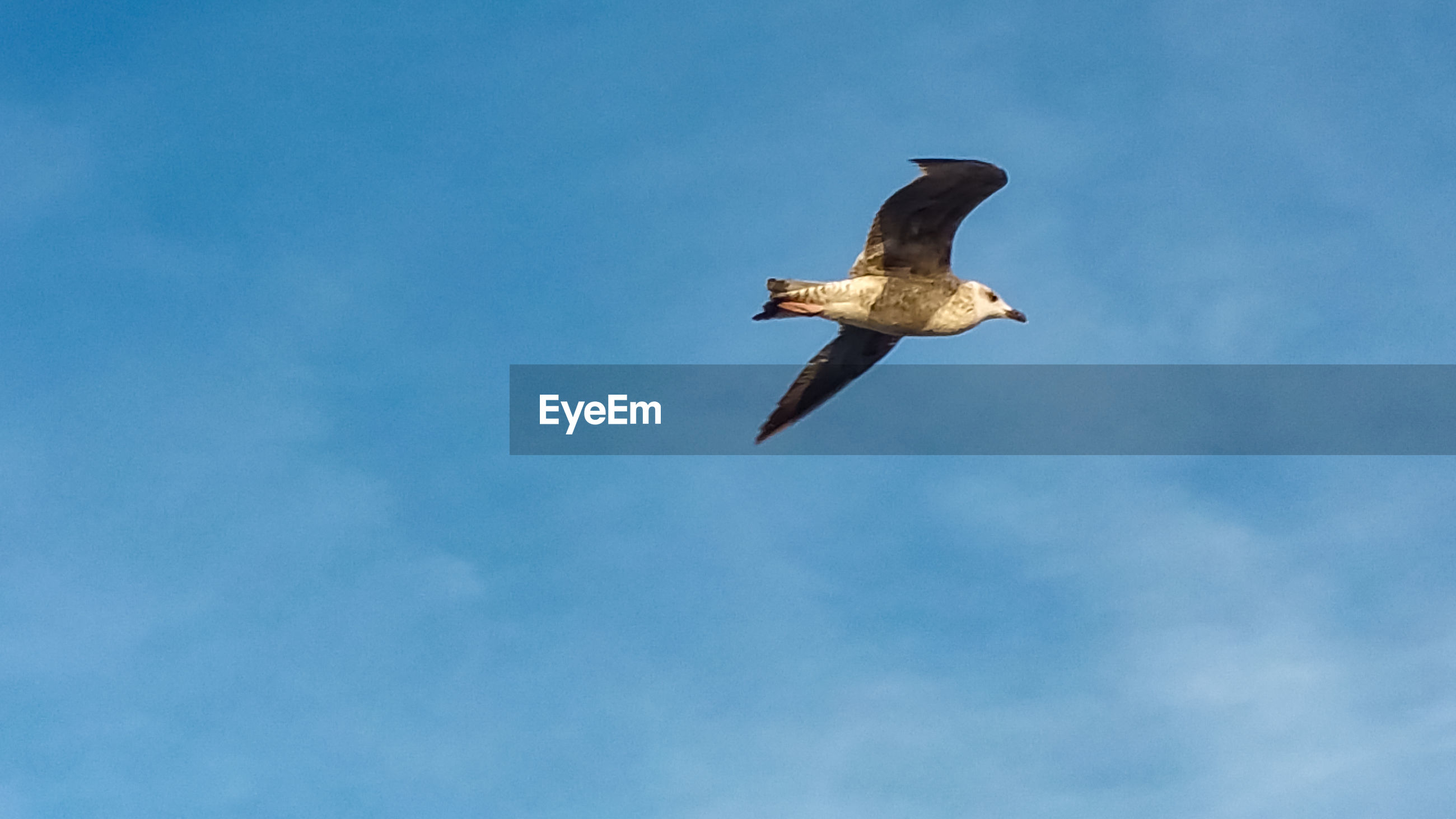 LOW ANGLE VIEW OF SEAGULL FLYING AGAINST BLUE SKY
