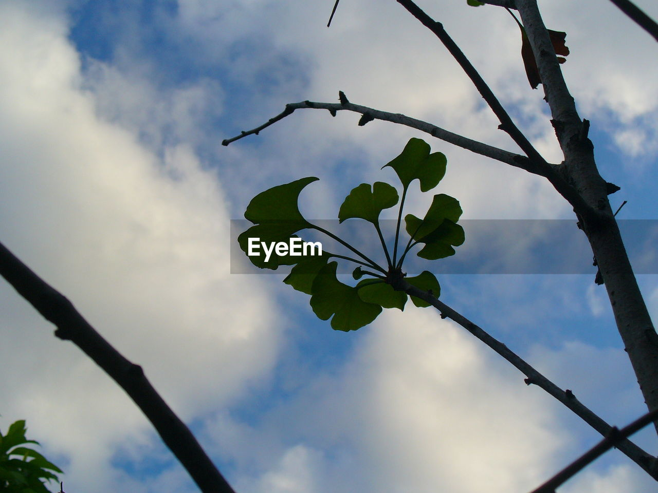 flower, leaf, low angle view, nature, beauty in nature, fragility, growth, no people, branch, sky, day, freshness, twig, outdoors, petal, tree, cloud - sky, plant, close-up, flower head, blooming