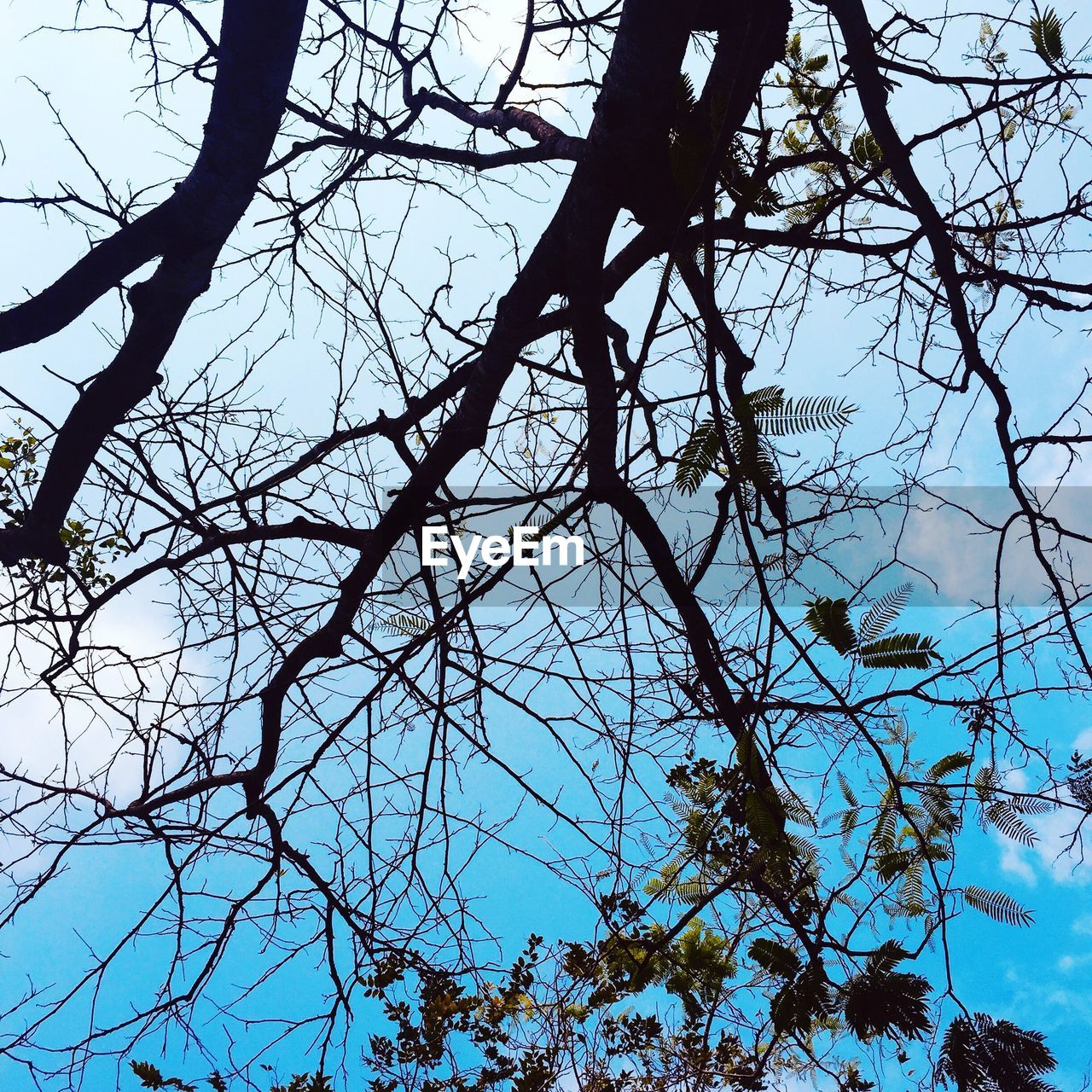 tree, low angle view, branch, plant, sky, no people, beauty in nature, tranquility, nature, growth, day, bare tree, outdoors, clear sky, silhouette, blue, scenics - nature, sunlight, tranquil scene, twig, tree canopy