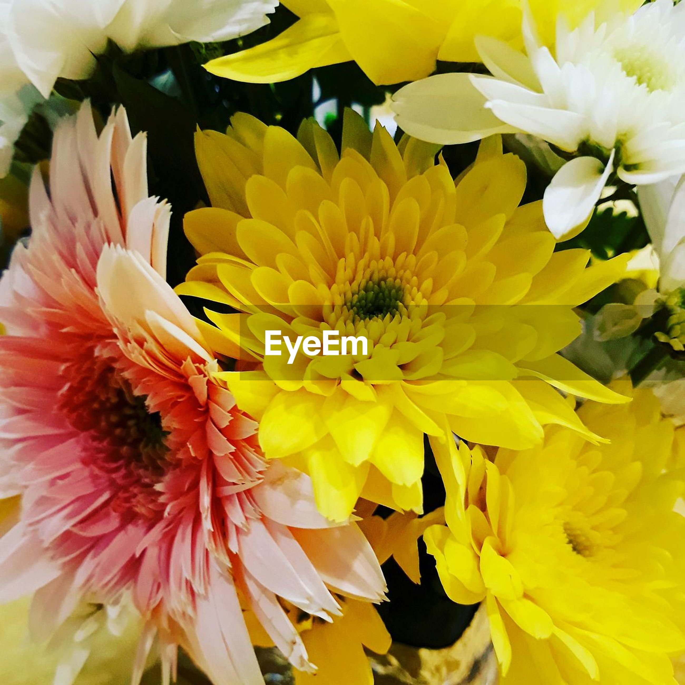 flowering plant, flower, petal, vulnerability, fragility, flower head, freshness, beauty in nature, inflorescence, plant, yellow, close-up, growth, nature, pollen, chrysanthemum, day, no people, outdoors, flower arrangement, bouquet, gazania