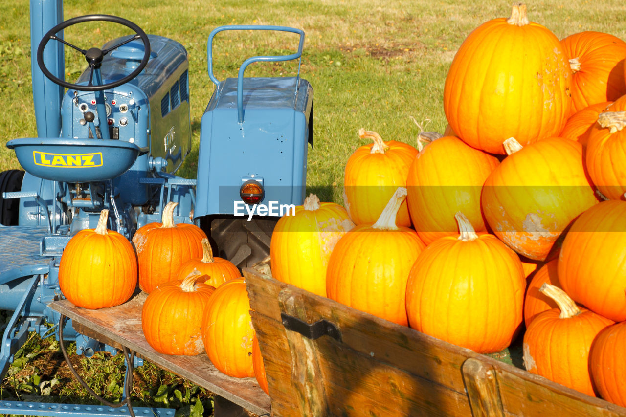 pumpkin, orange color, food and drink, day, vegetable, no people, halloween, outdoors, grass, food, freshness, healthy eating, nature, jack o lantern, close-up