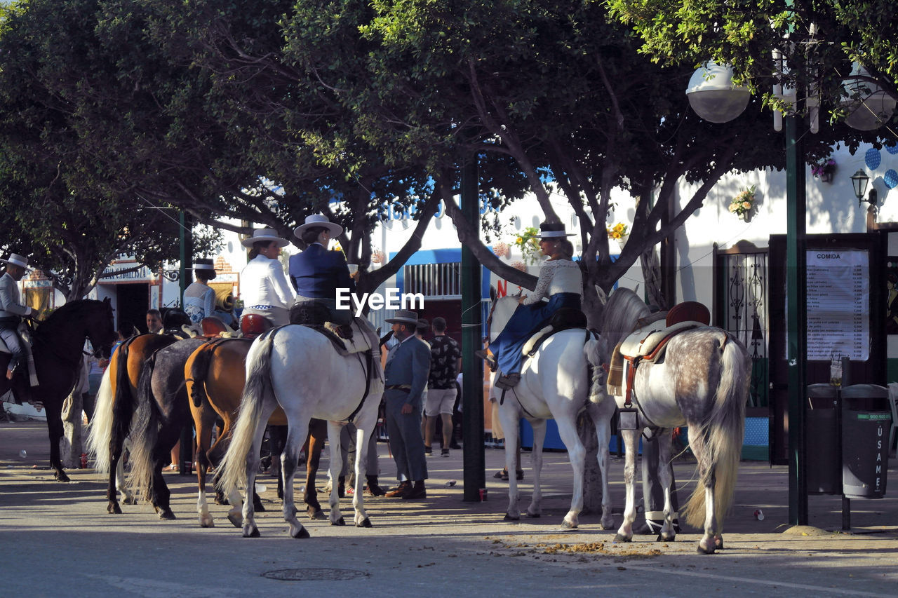HORSES IN THE STREET